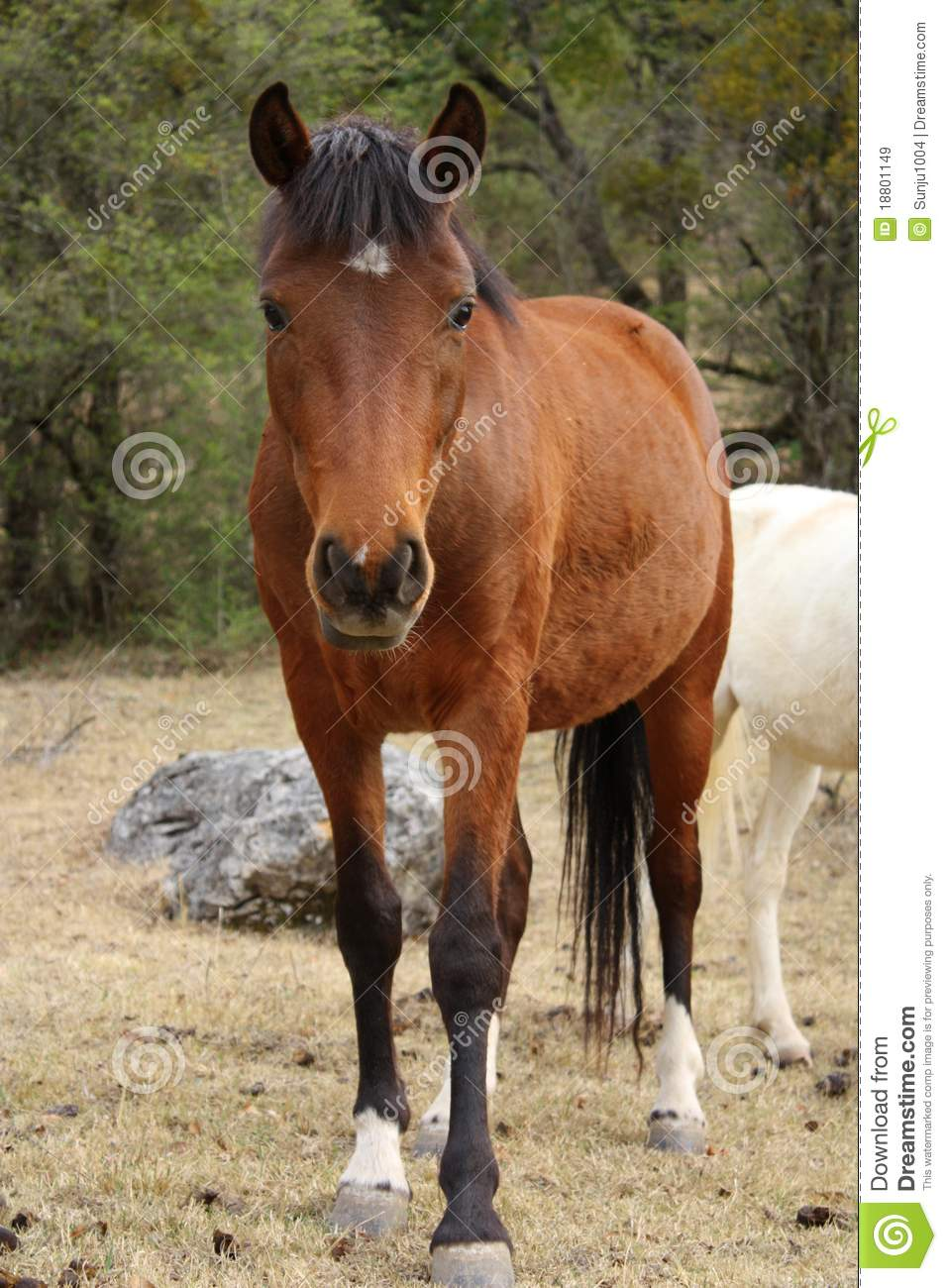 Horse stock image image of farm details fields mammal 18801149 horse royalty free stock photo sciox Choice Image