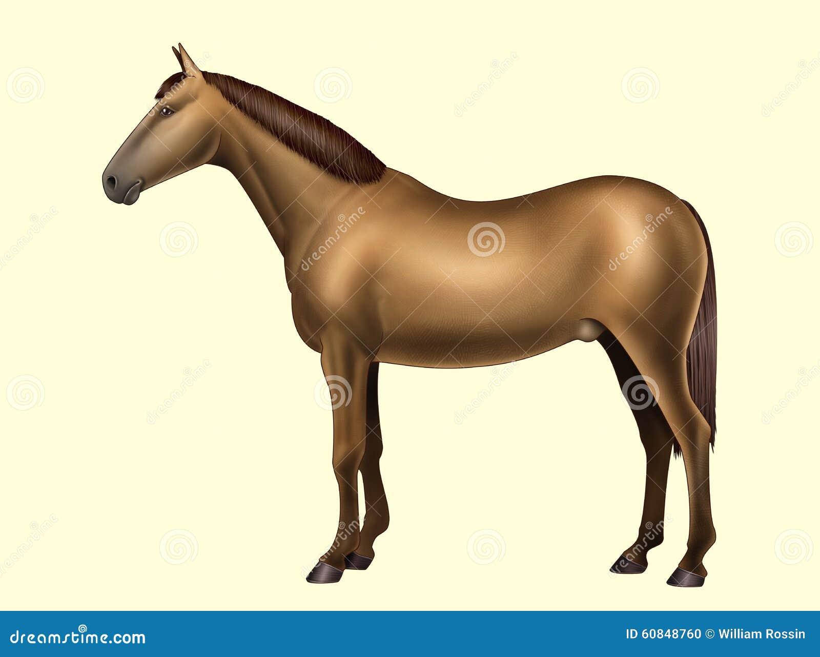 Horse Anatomy - Body Parts - No Text Stock Illustration ...