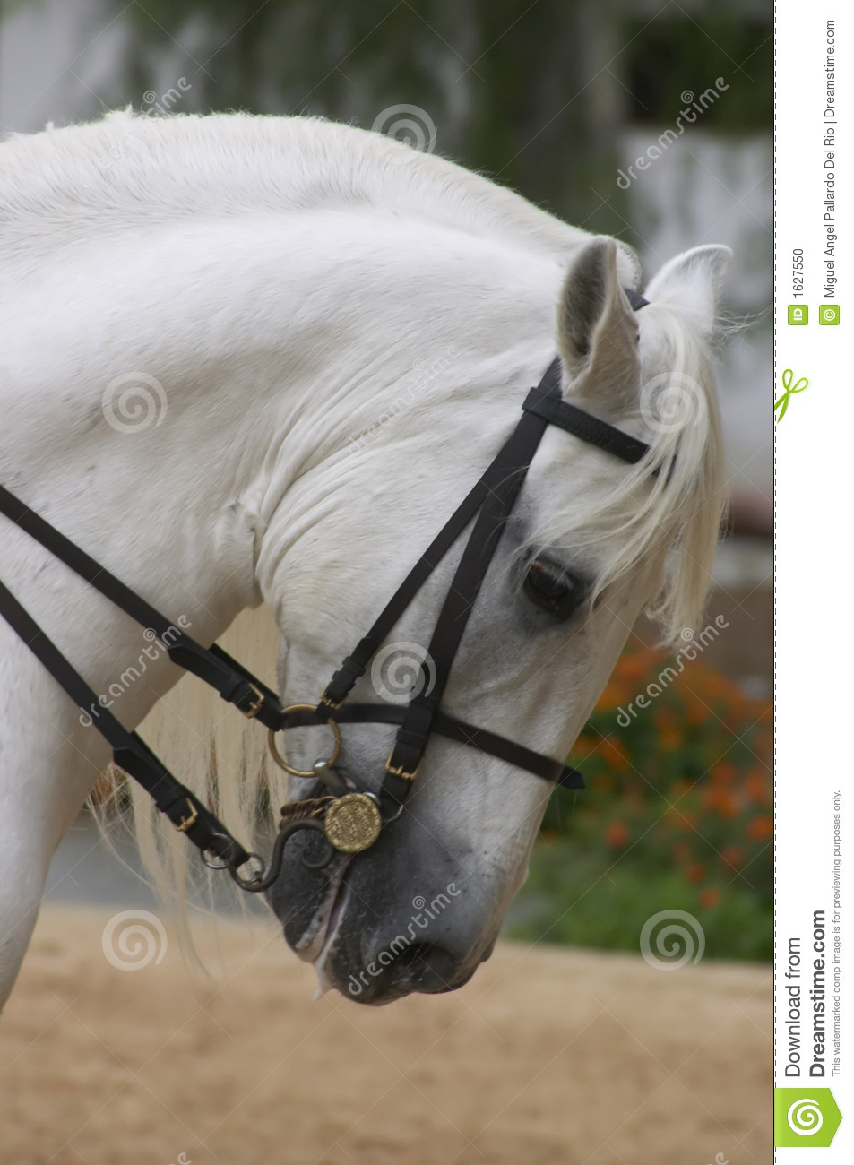 Horse in Andalusia, Spain