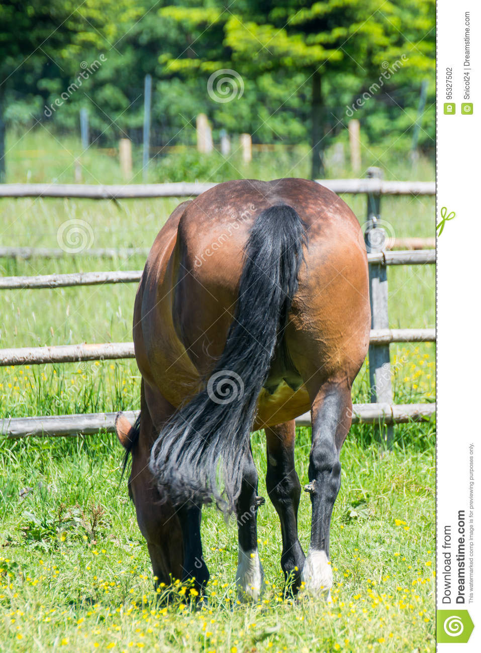 Horse arse stock photo. Image of eating, tail, brown