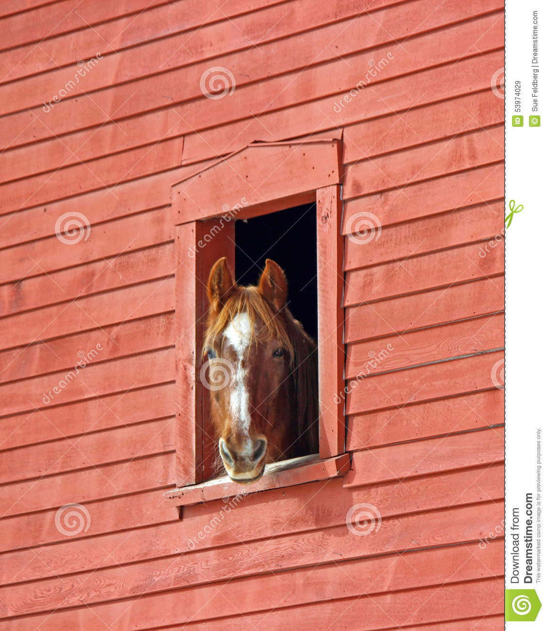 Horse in the barn stock photo image 53974029 for Window horses