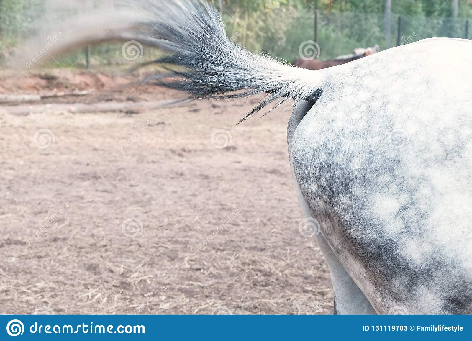 Horse beats a tail on the body, waving off insects.