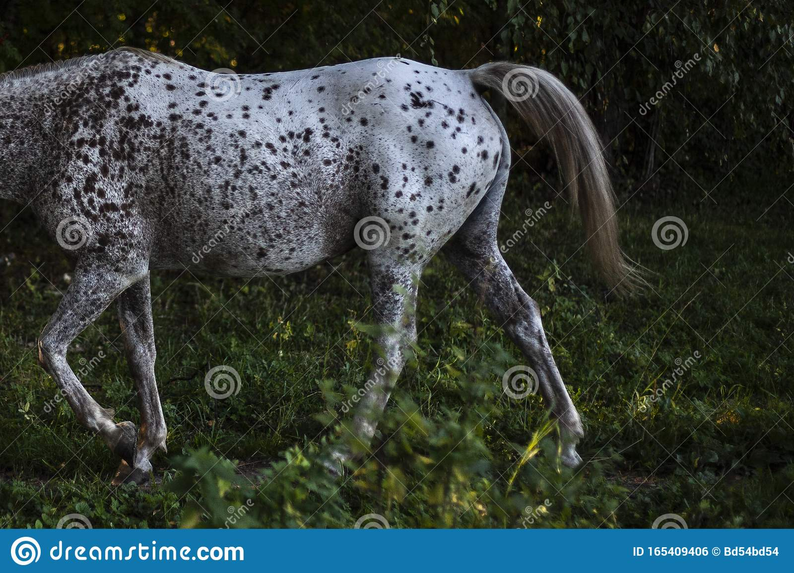 A Horse With A Beautiful Color Horse On The Farm Stock Photo Image Of Clarity Observation 165409406