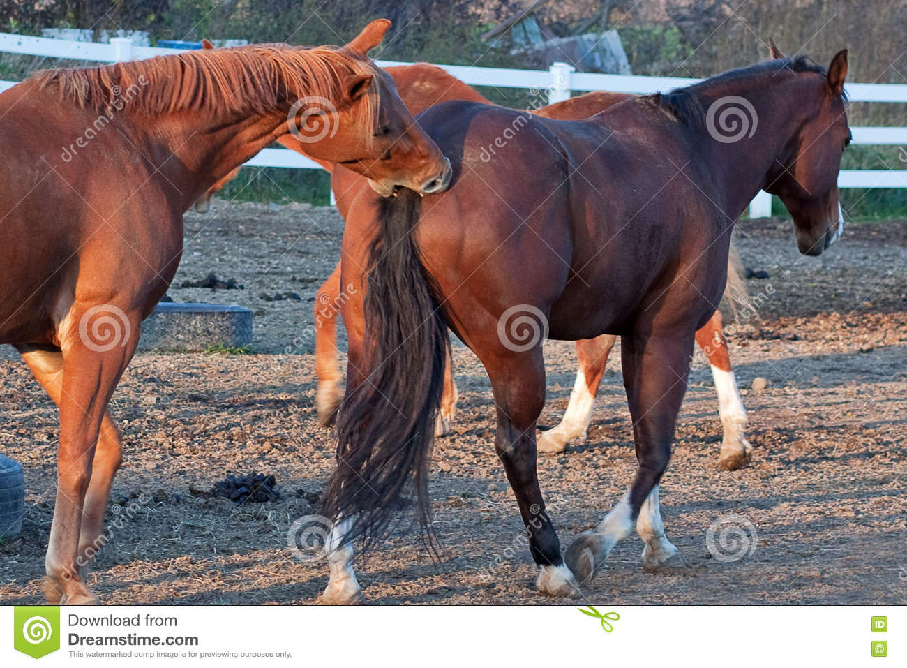 how to stop a horse from biting another horse