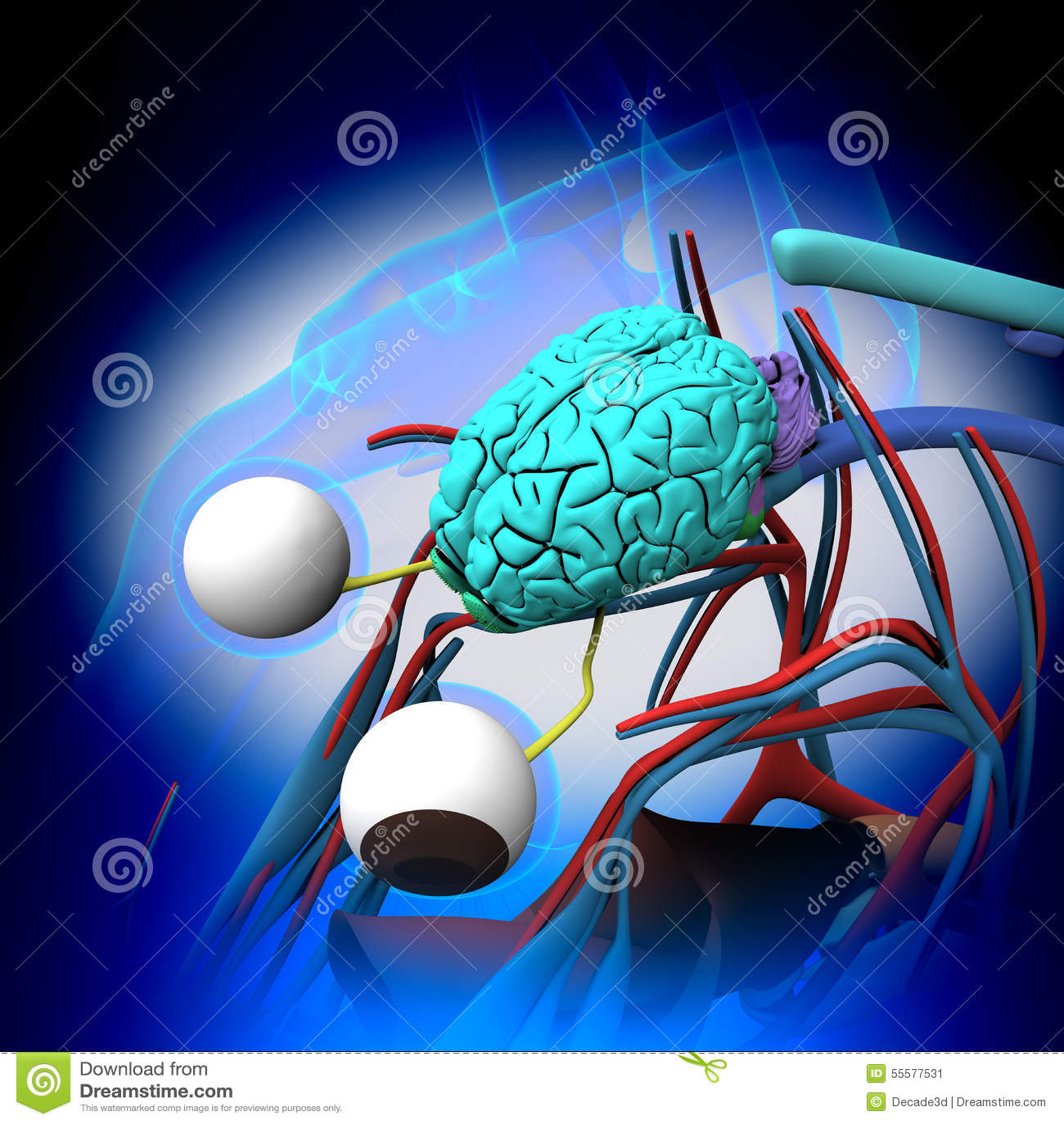 Horse Brain Anatomy - Cross-section On Blue Background Stock Image ...