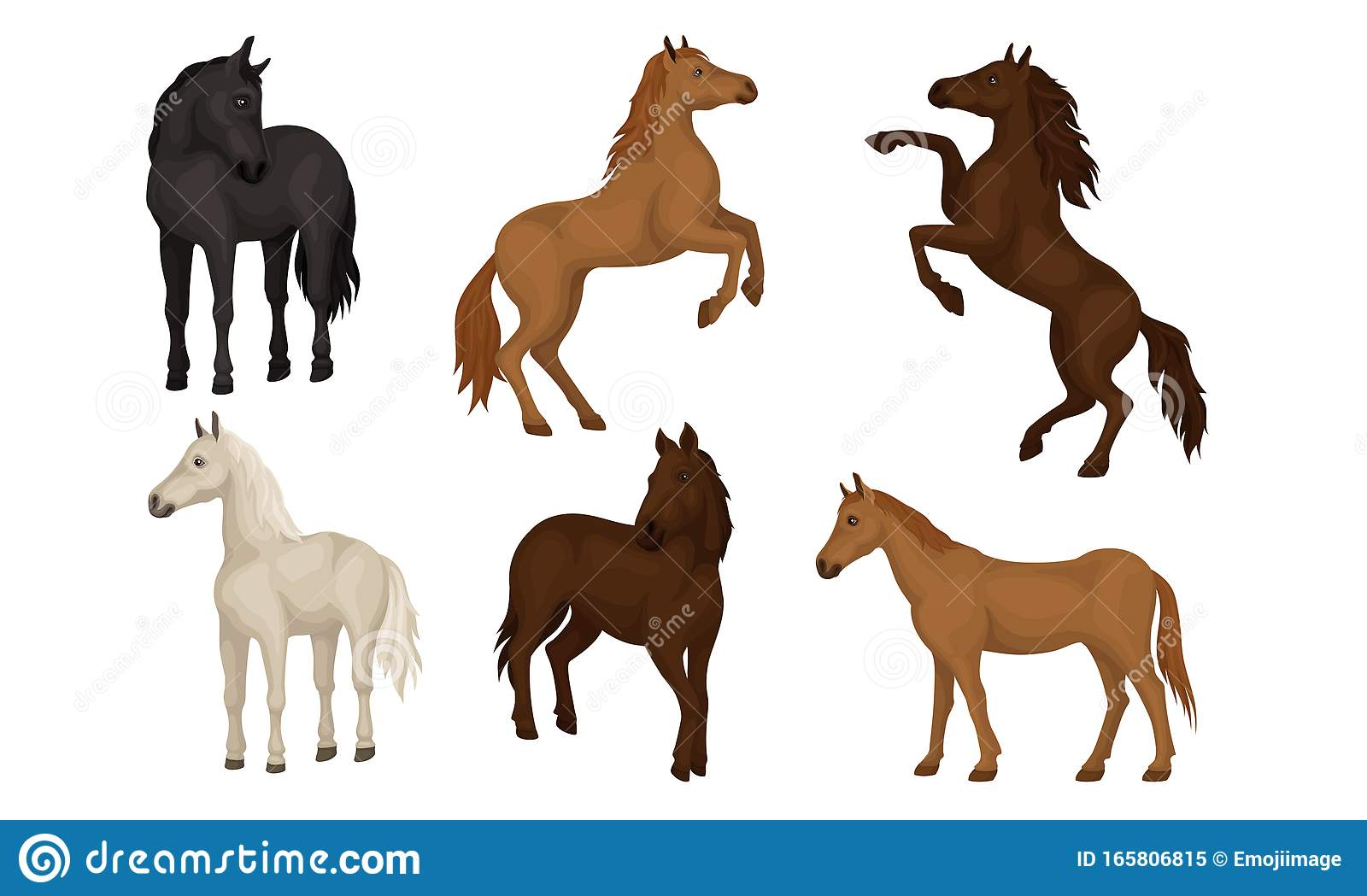 Horse Breeds Collection Beautiful Horses Of Different Colors Vector Illustration Stock Vector Illustration Of Farm Action 165806815