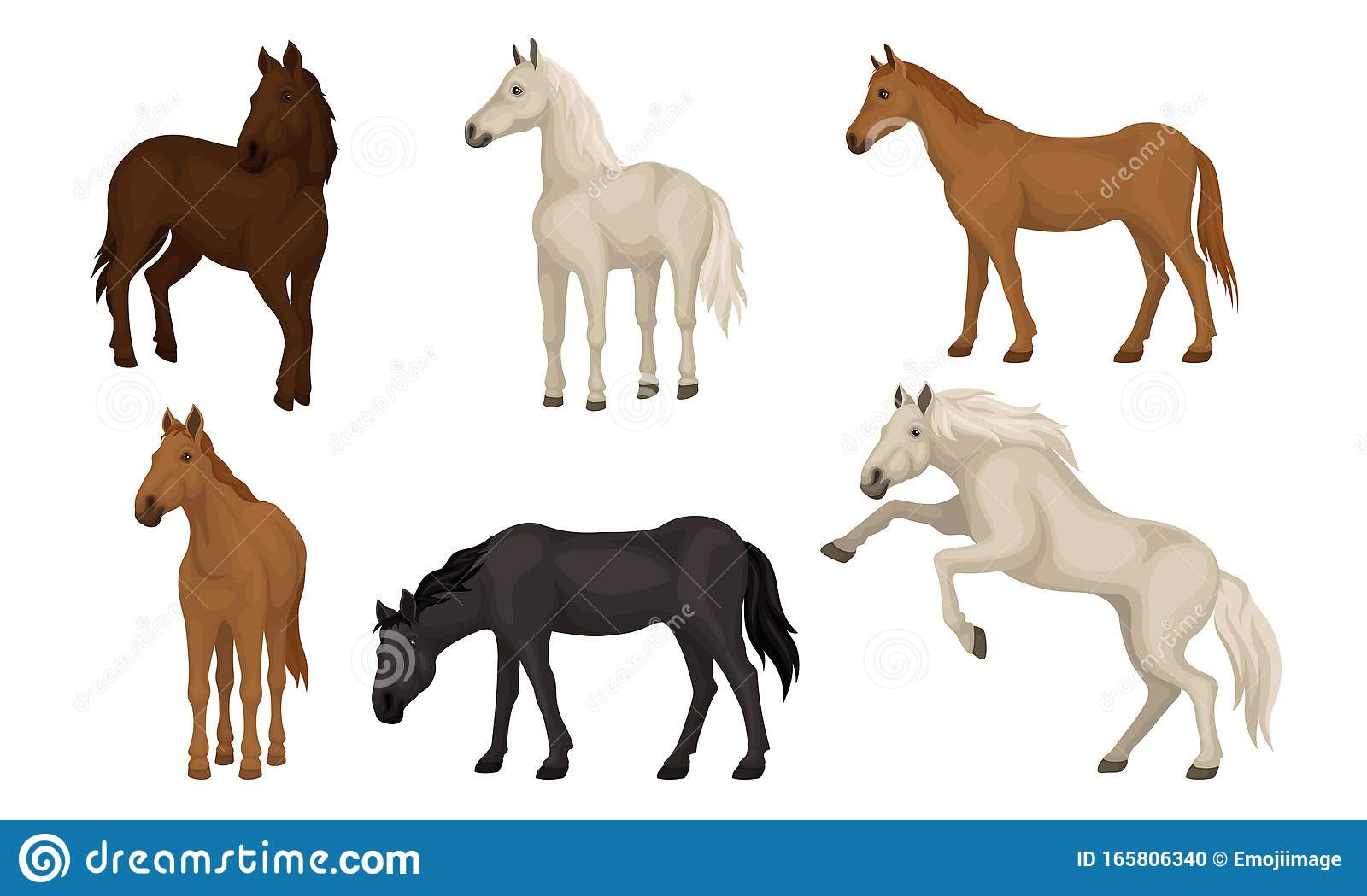 Horse Breeds Set Beautiful Horses Of Different Colors Vector Illustration Stock Vector Illustration Of Drawing Horse 165806340
