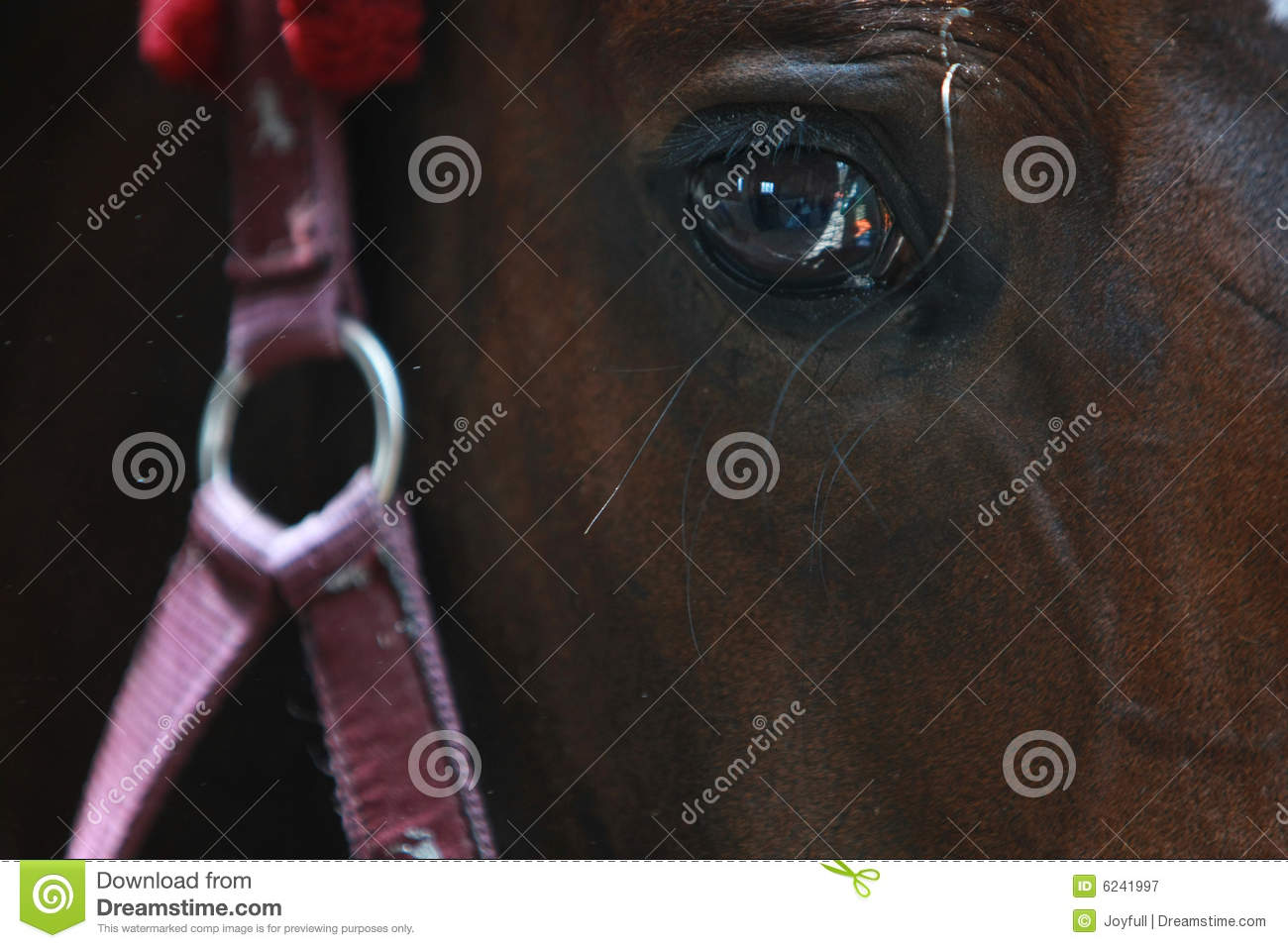 Horse with bridle stock image  Image of rigging, dark - 6241997