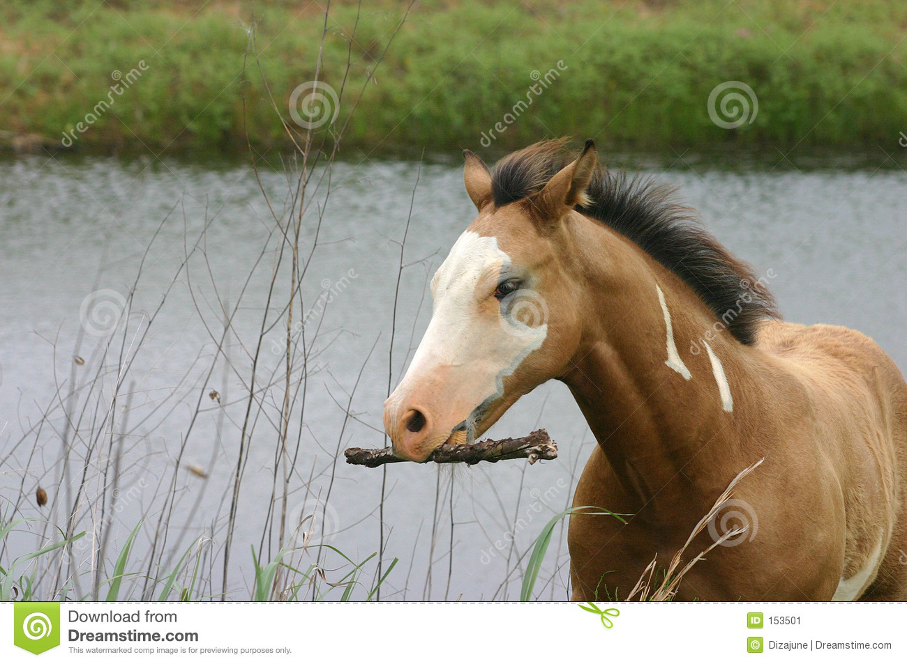 Horse Carrying Stick
