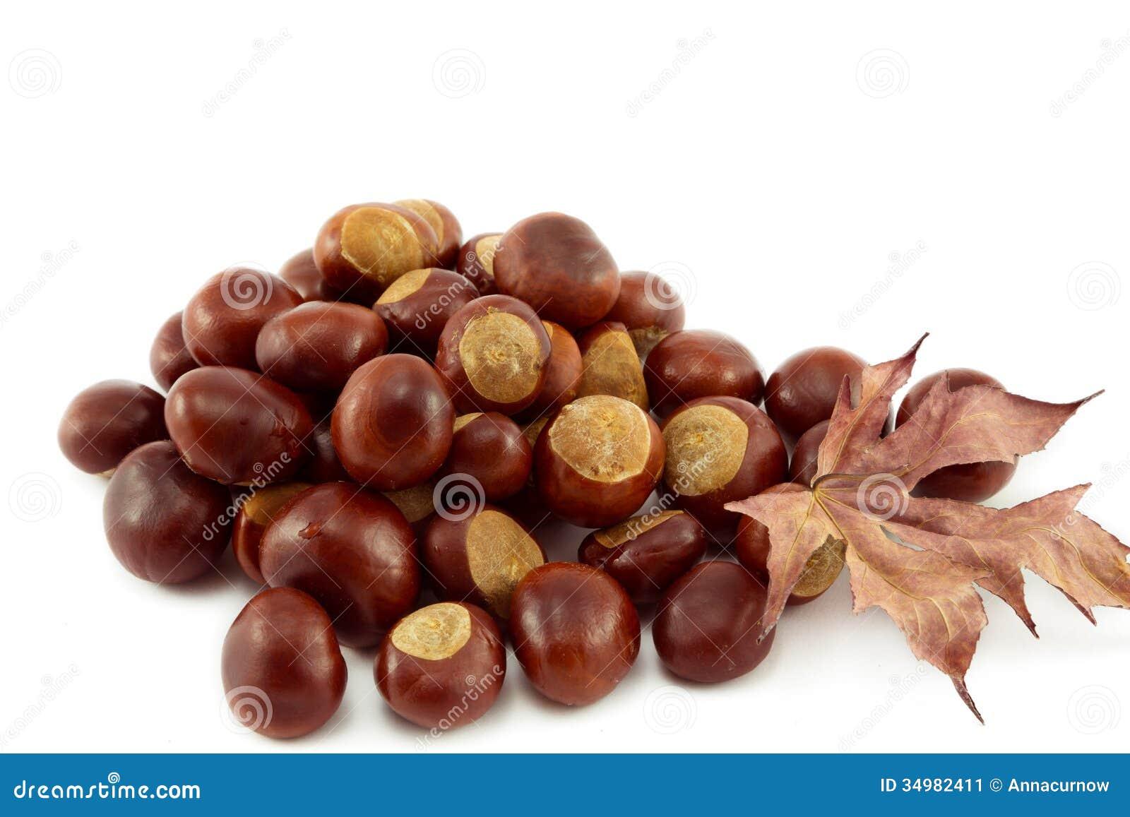 Horse chestnut stock image image 34982411 for The chestnut