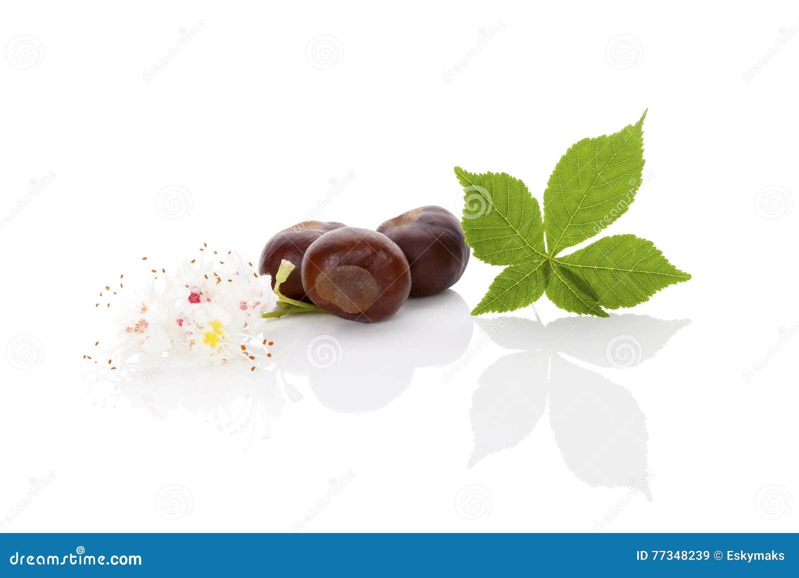 Horse Chestnut Background Stock Image Image Of Botanical 77348239