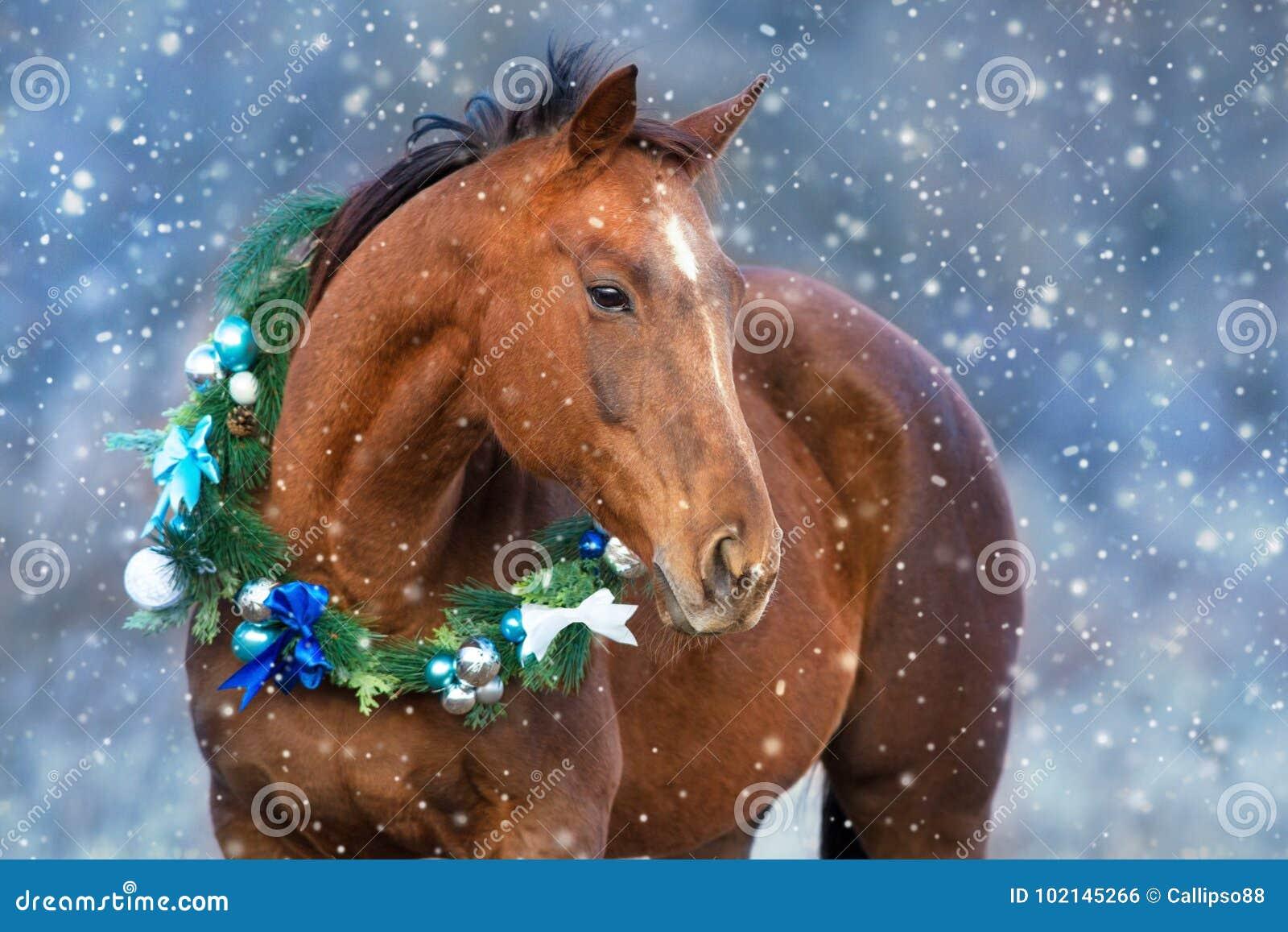 Horse in christmas wreath