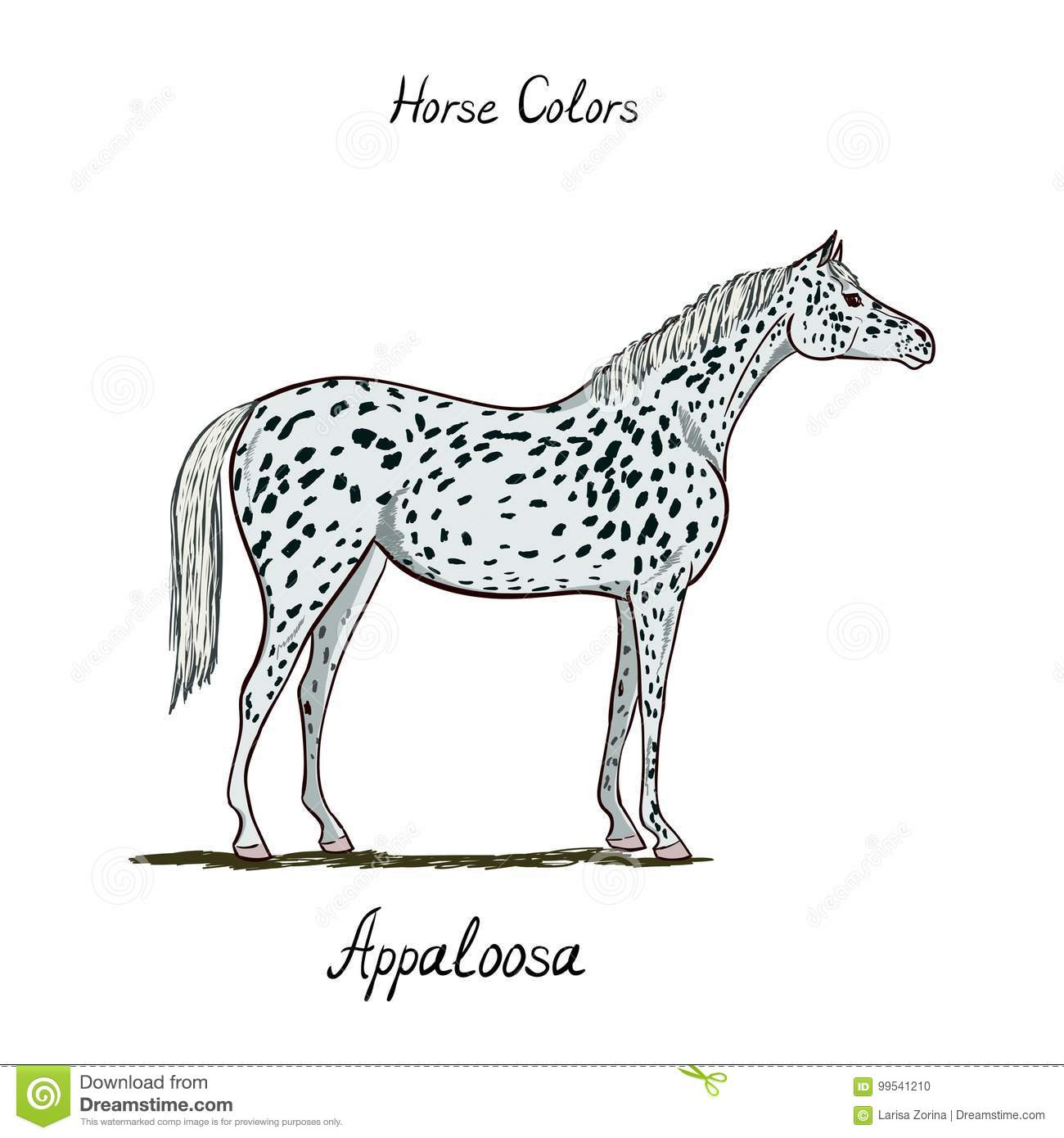 Horse color chart on white equine appaloosa coat color with text horse color chart on white equine appaloosa coat color with text nvjuhfo Gallery