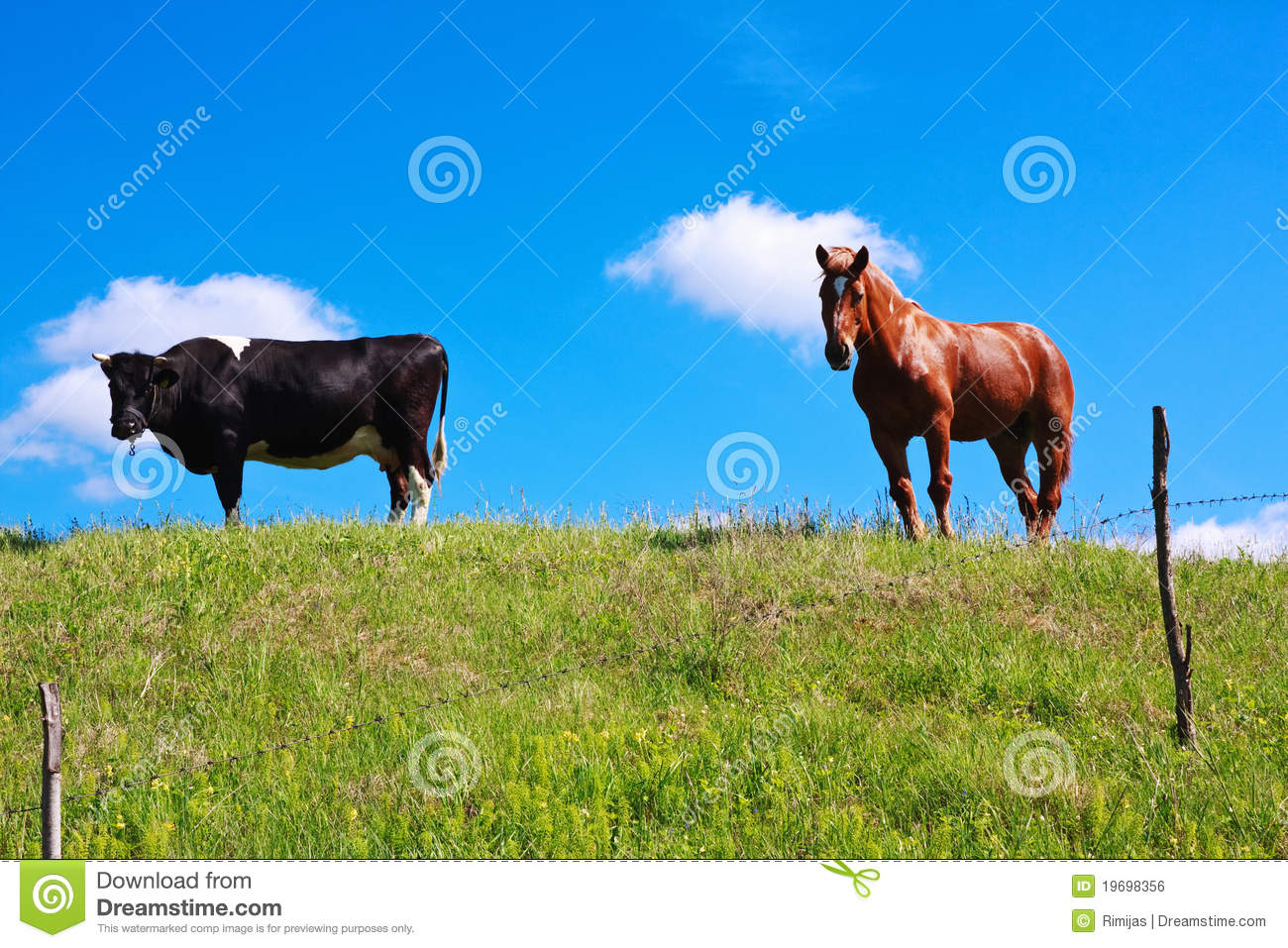 Horse And Cow Royalty Free Stock Image - Image: 19698356