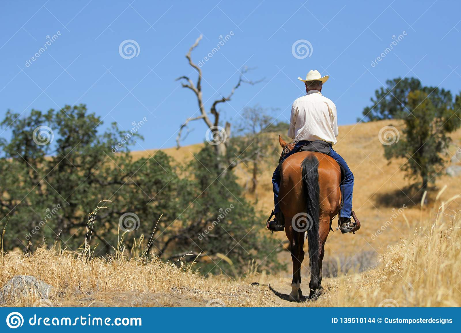 Horse and cowboy on a mountain trail