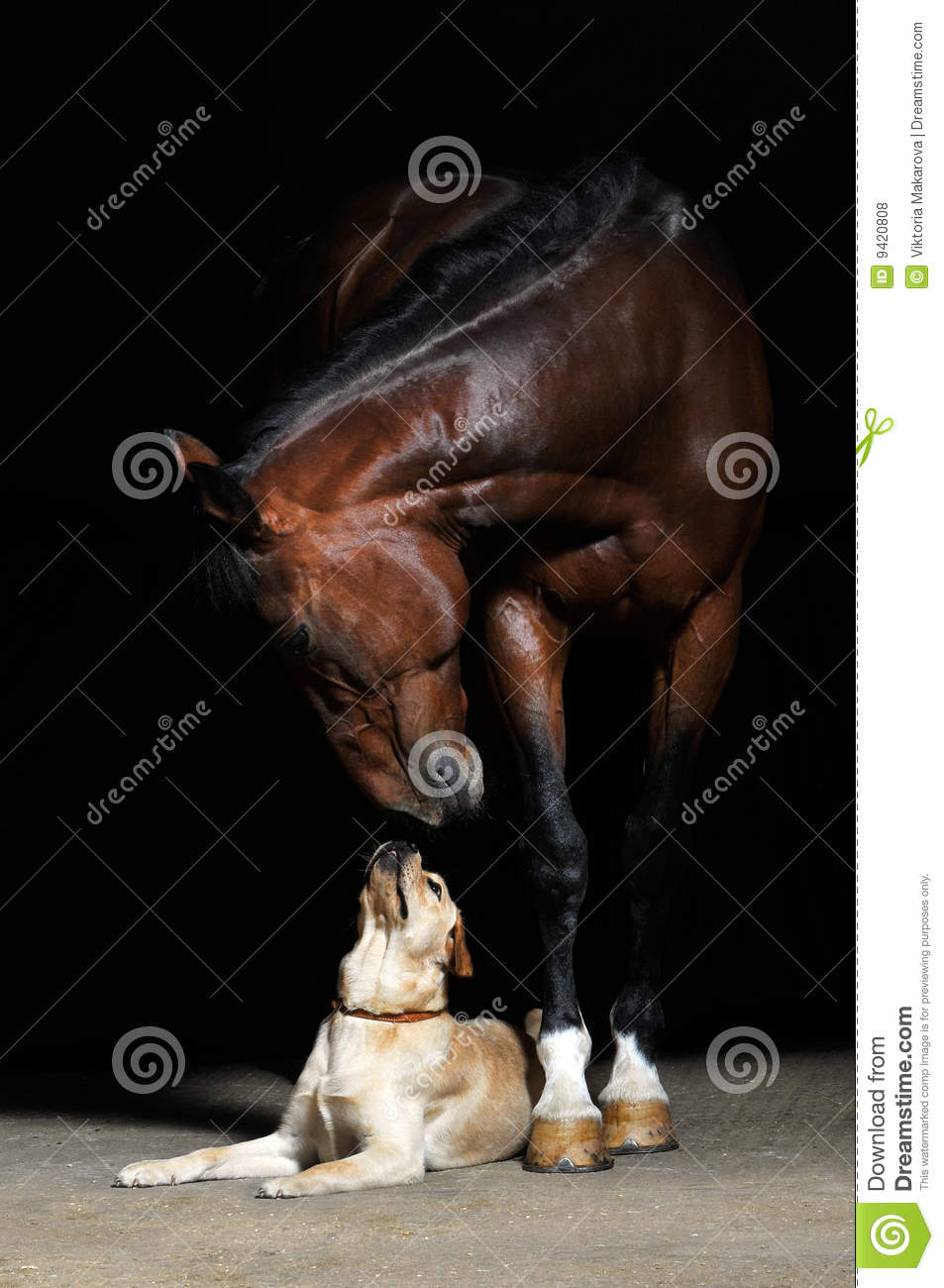 Horse and dog on the black background
