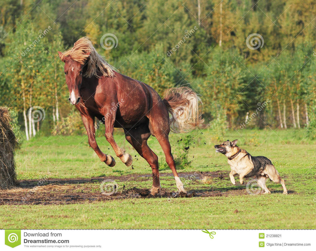 Horse And Dog Play Together Stock Image - Image: 21238821