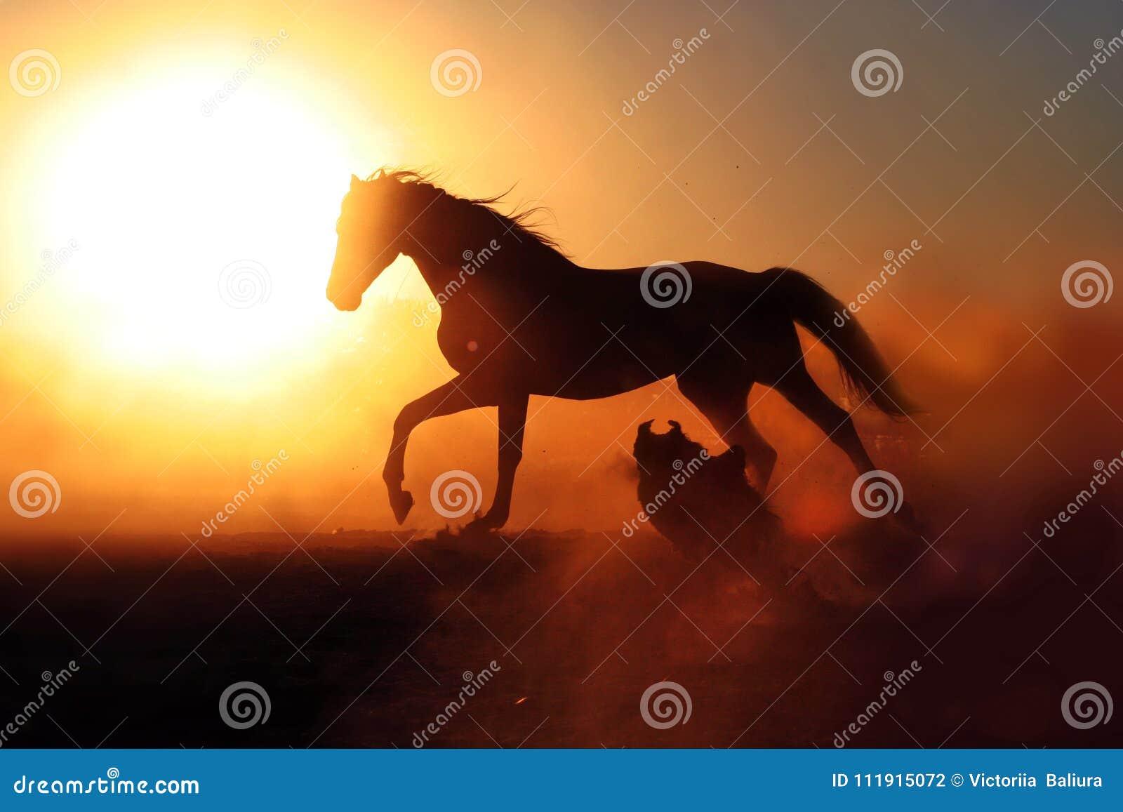 Horse And Dog On Sunset Background Stock Photo Image Of Snow Animal 111915072