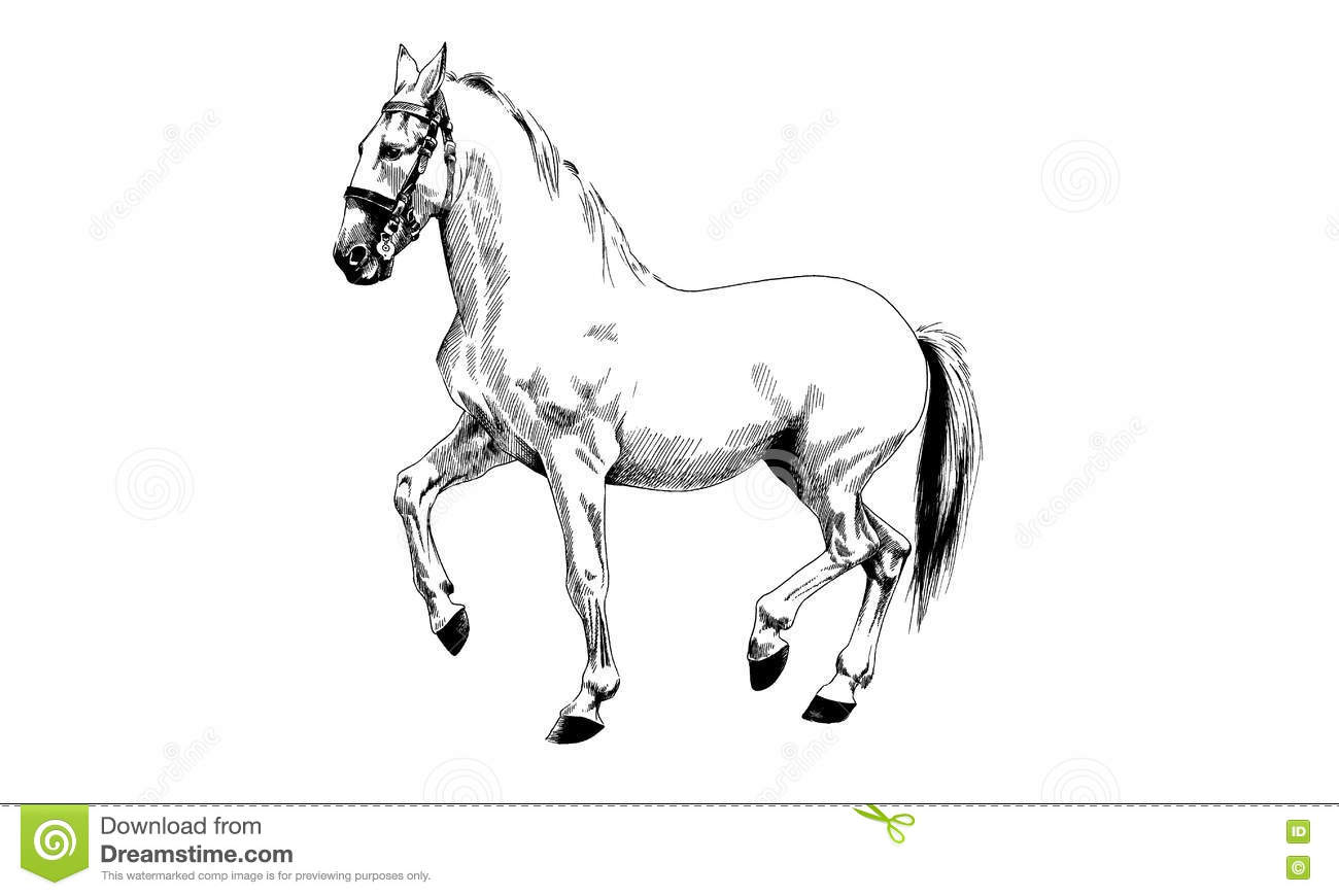 Download Horse Drawn Black And White Stock Vector