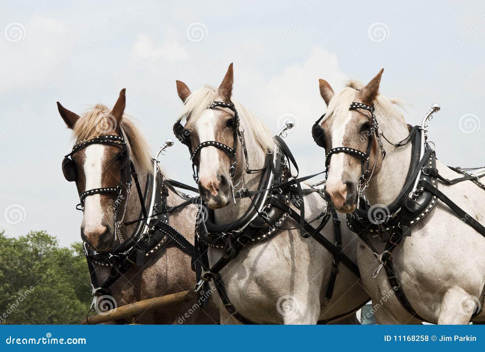 Horse-drawn de landbouwdemonstraties