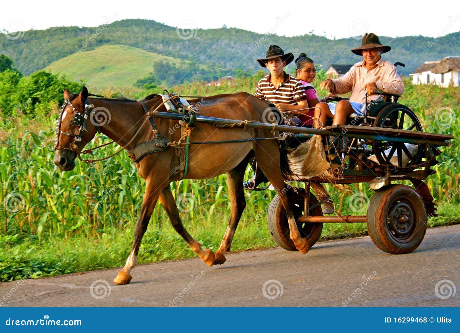 Horse-Drawn Vervoer in Viñales Vallei, Cuba