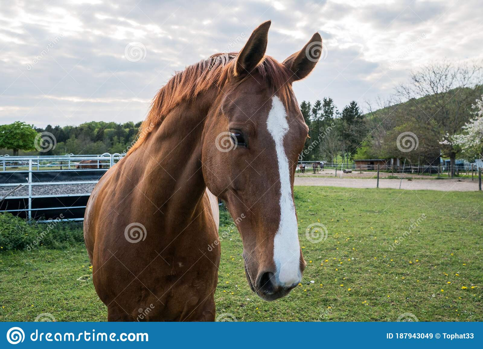 Horse Eating Grass In A Yard Of A Farm Beautiful Colors At Sunset South Stock Image Image Of Artistic Dark 187943049