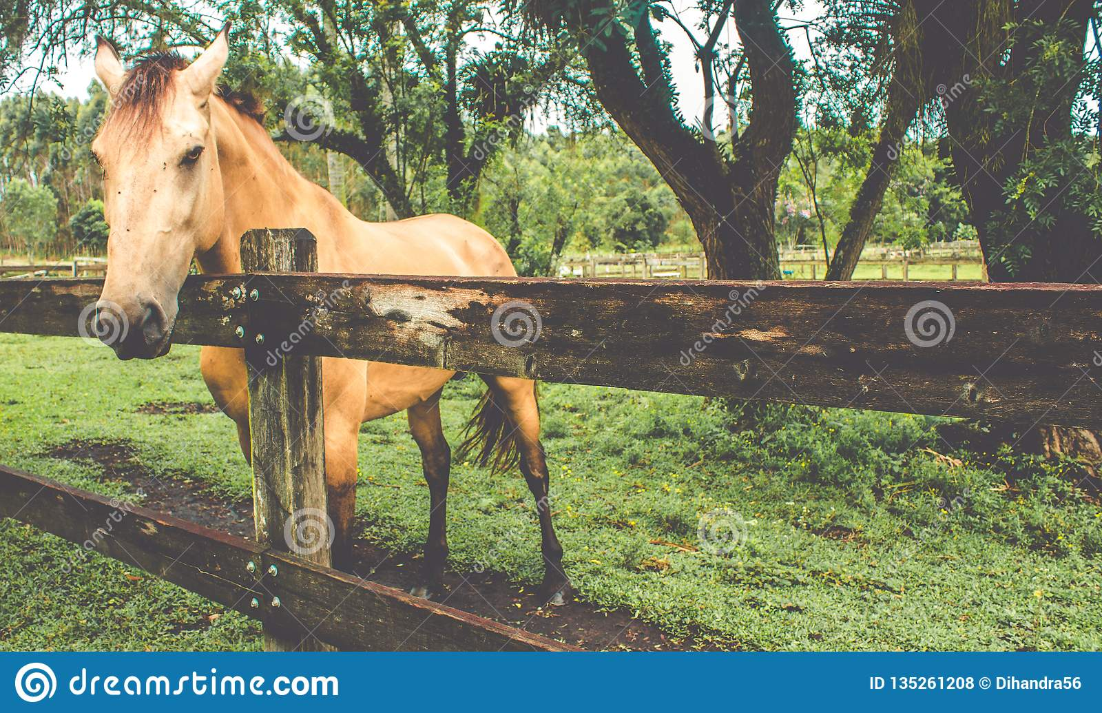 Horse ehind a wood fence