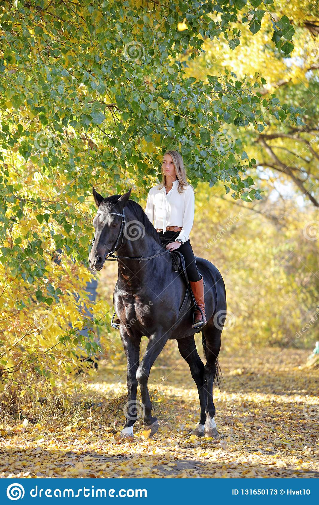 Horseback Woman Riding A Horse In Autumn Yellow Woods Stock Image Image Of Background Bridle 131650173