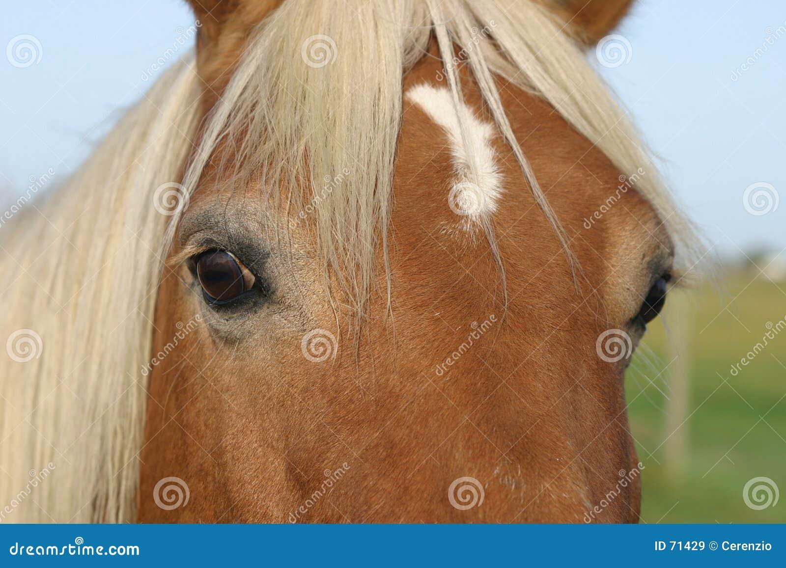 Horse Face