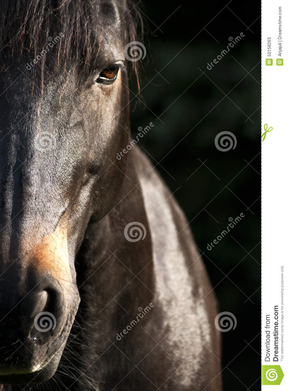 horse face close up frontal stock photo image 50158263