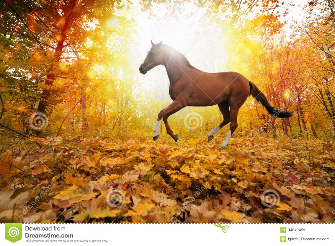 horse in fall park royalty free stock images image 34643459 clip art horses black and white clip art horses black and white