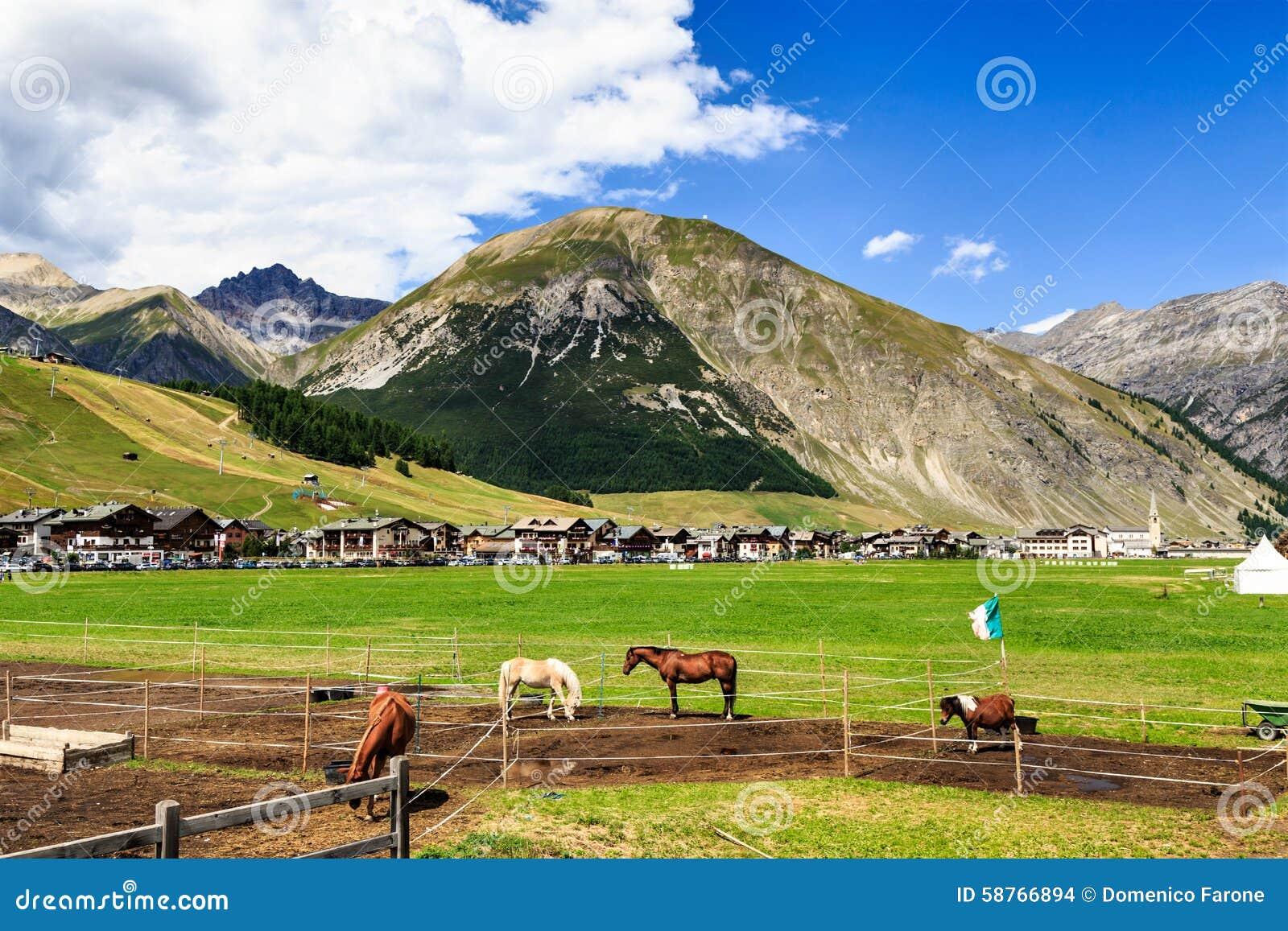 Horse farm in green valley near livigno italy stock photo for Green italy