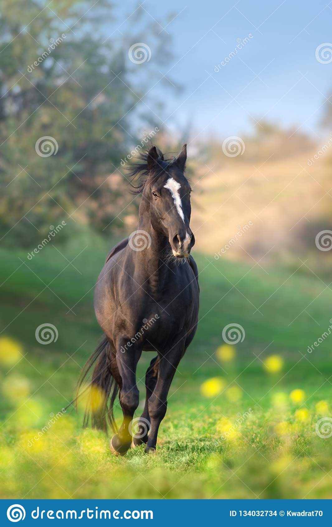Horse on flowers
