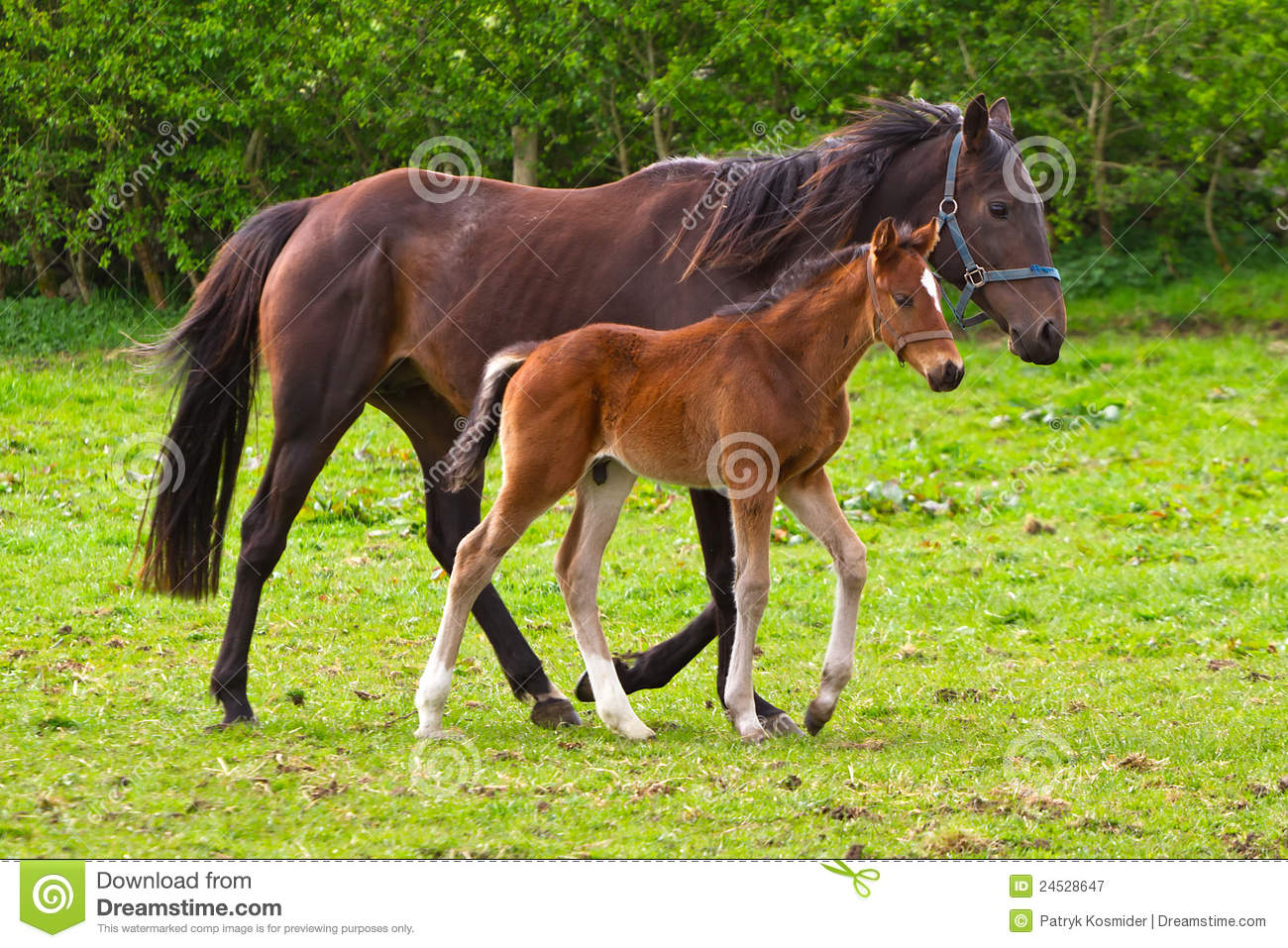 Horse and the foal
