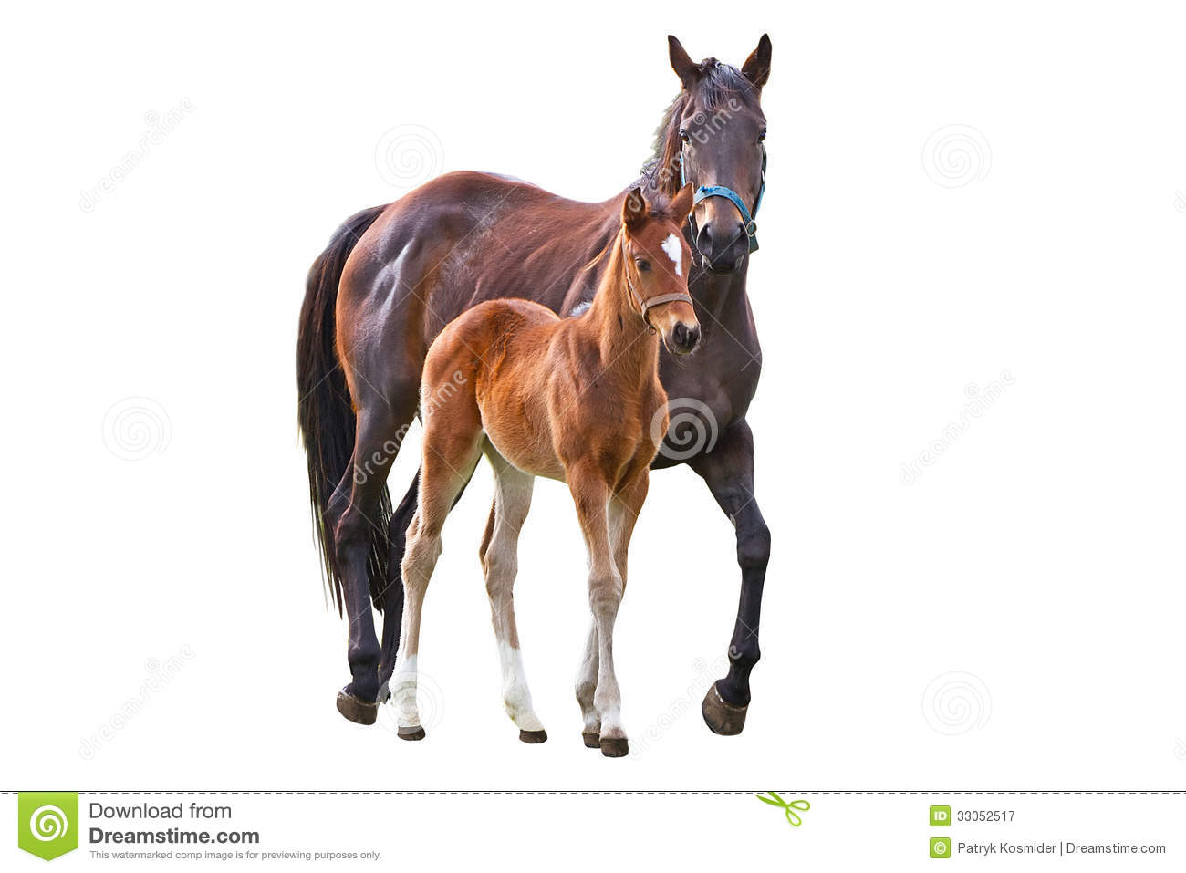 Horse with foal