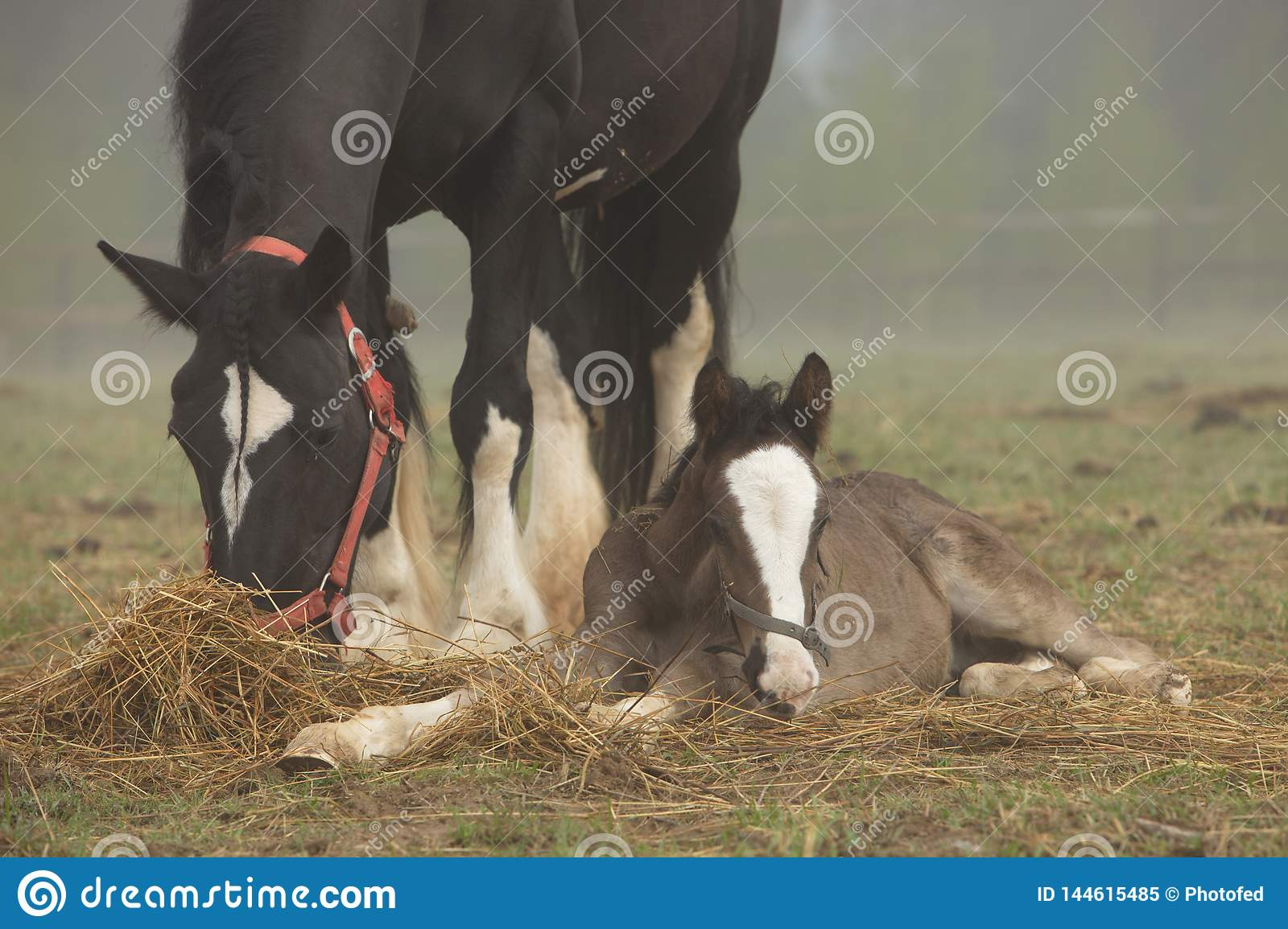 Horse and foal lie in the field