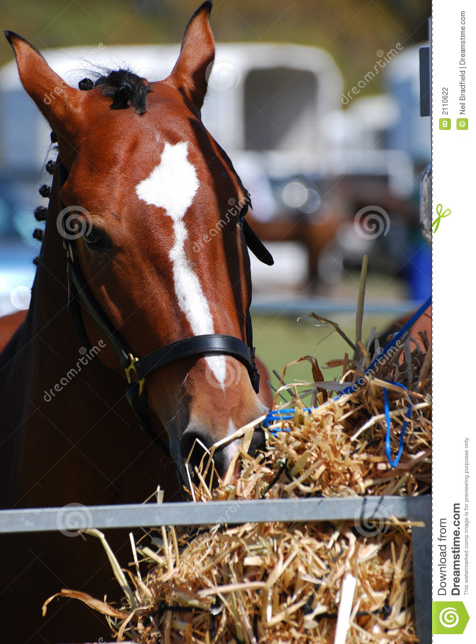 Horse Fodder Stock Photography - Image: 2110622