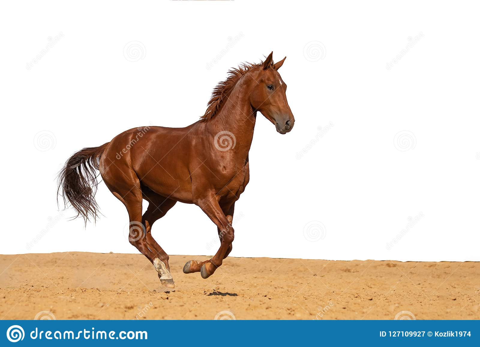 Horse galloping on sand on a white background