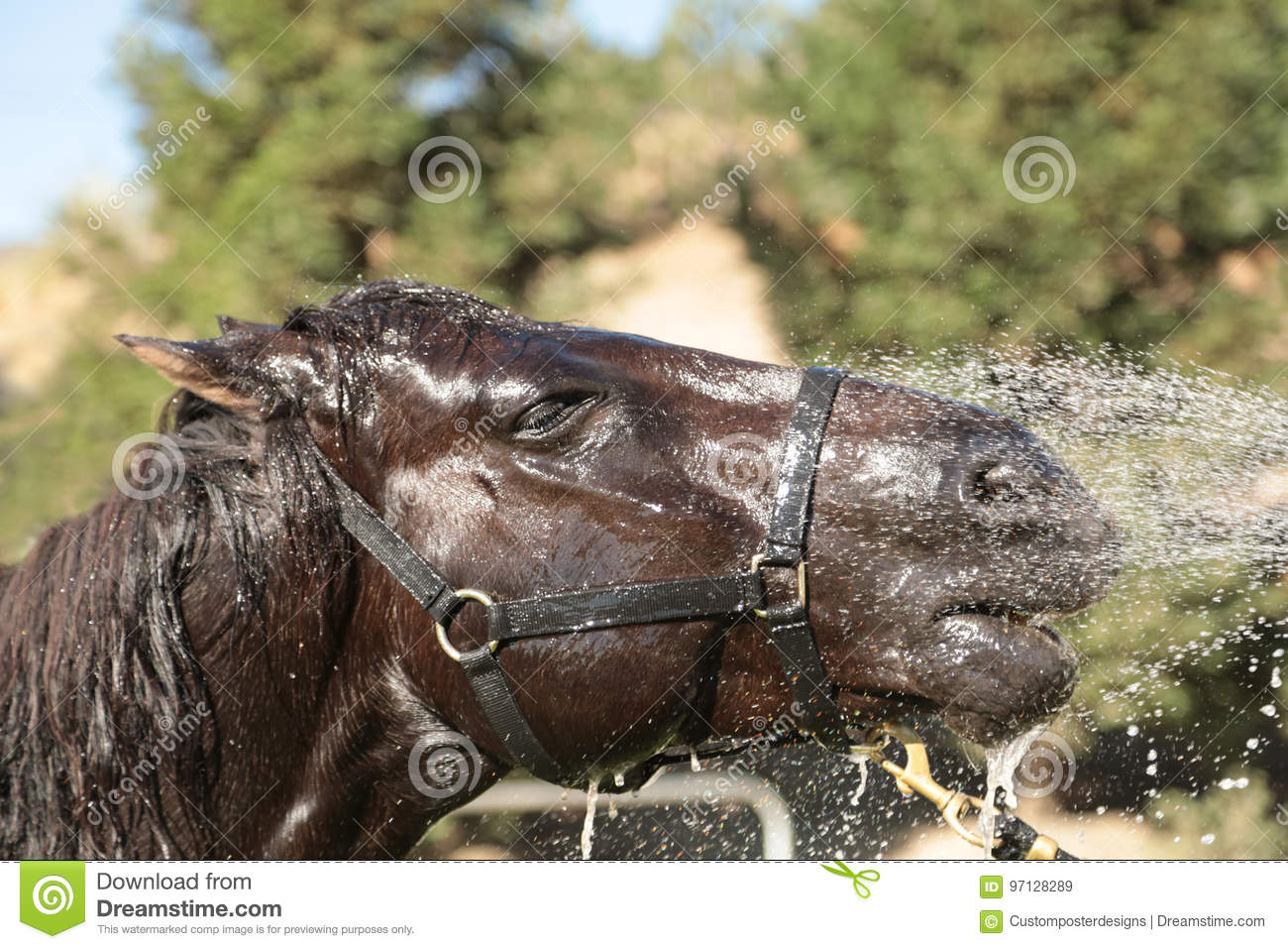 Download A horse getting a bath. stock image. Image of equine - 97128289