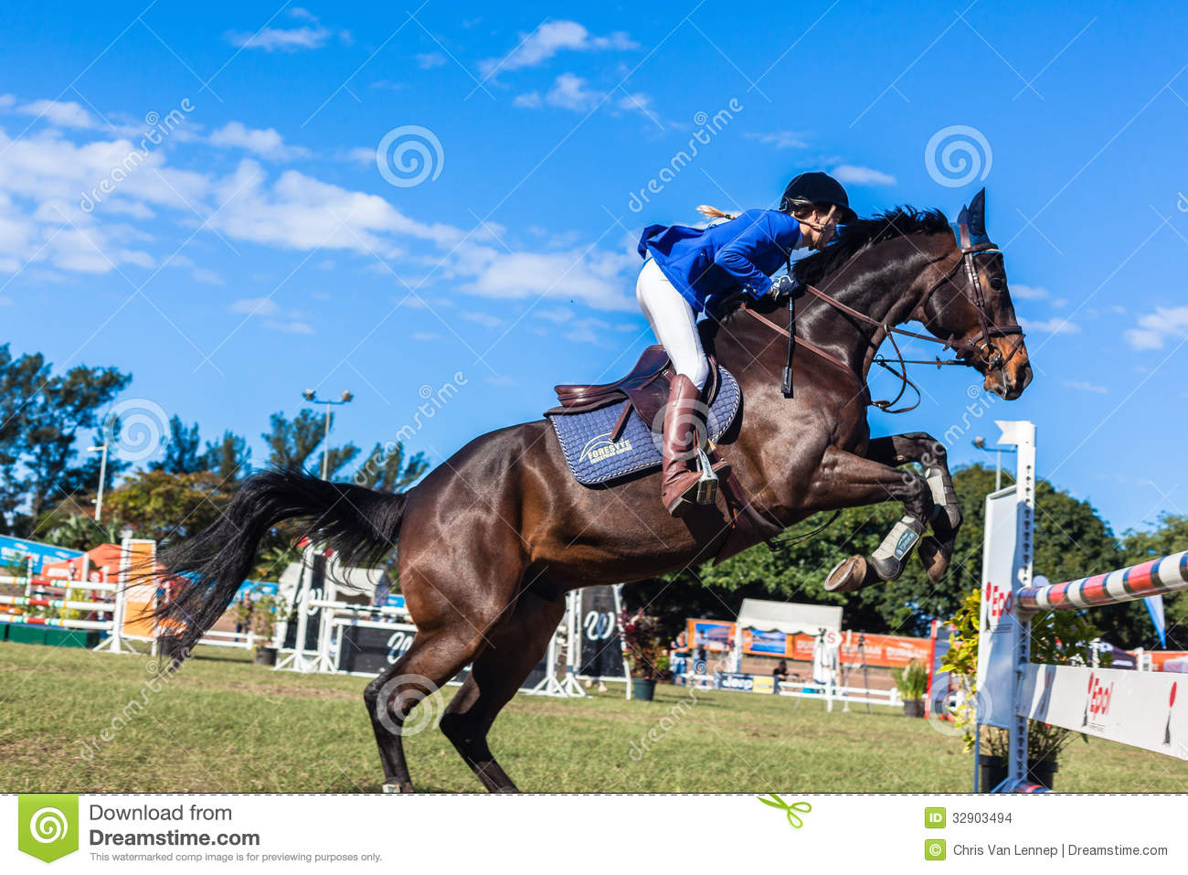 Horse Girl Blue Jump Upright Editorial Stock Image Image