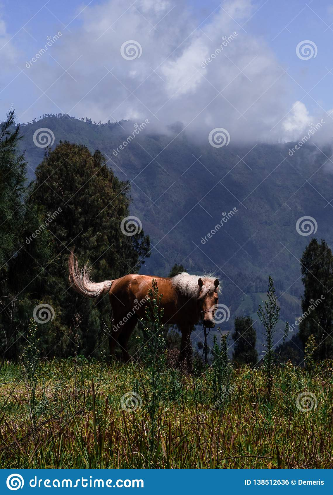 Horse Grazing in Field with Mountains Behind it