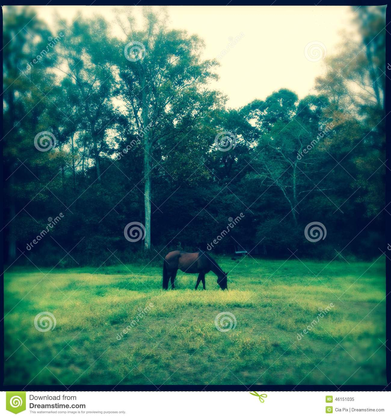 Horse grazing in green grass vintage effect