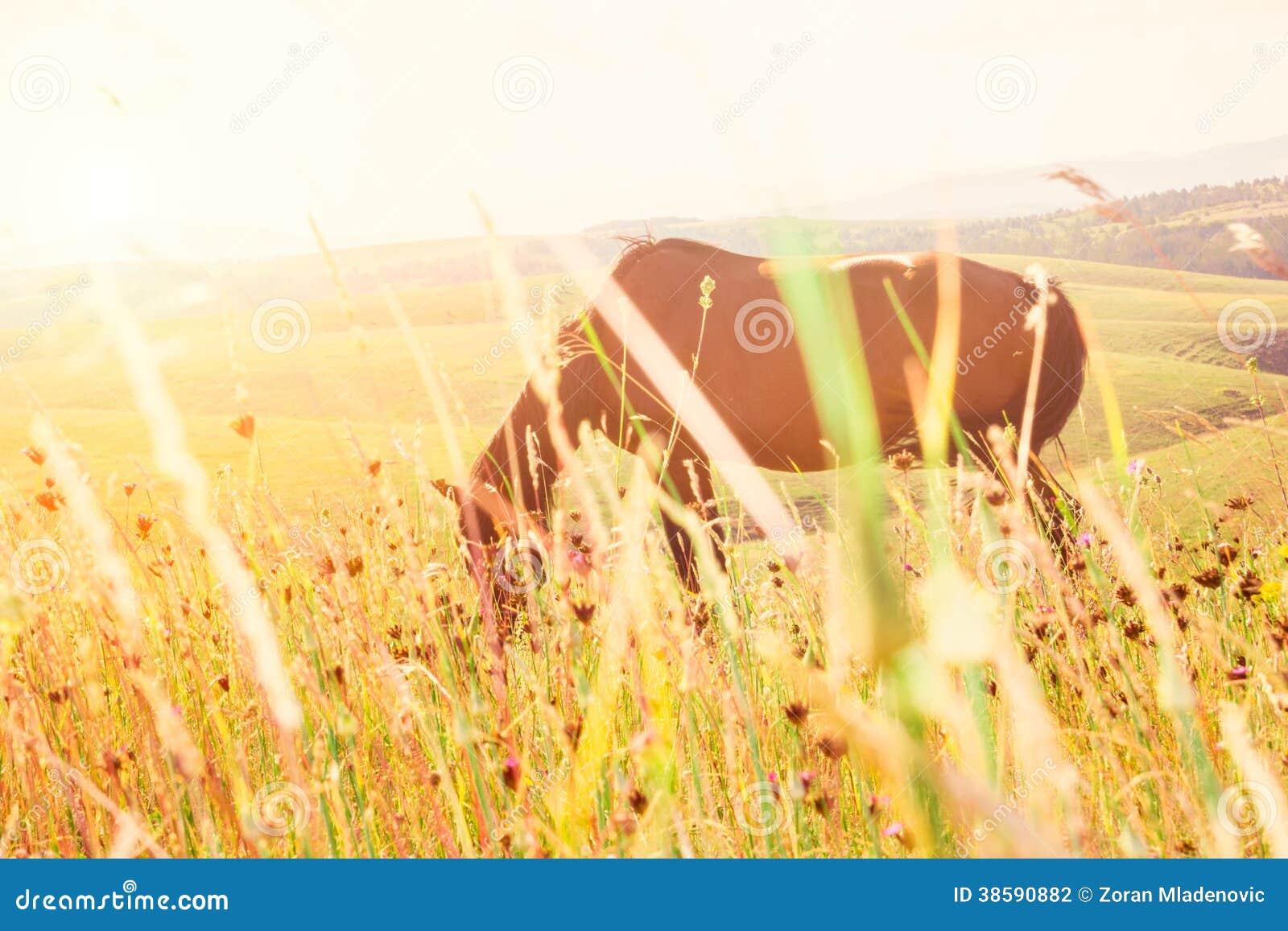 Horse grazing in sunny pasture