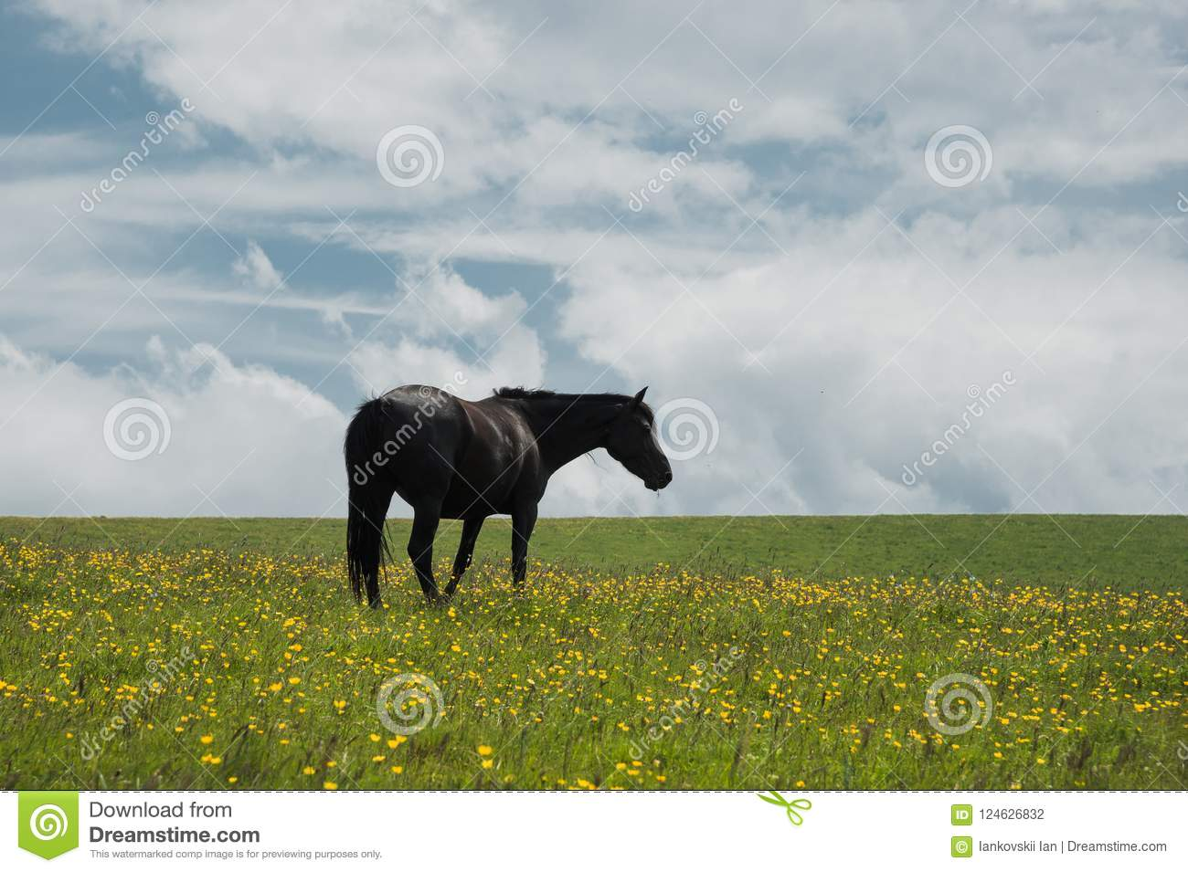 A Horse On A Green Pasture With Yellow Flowers Against A Blue Sky