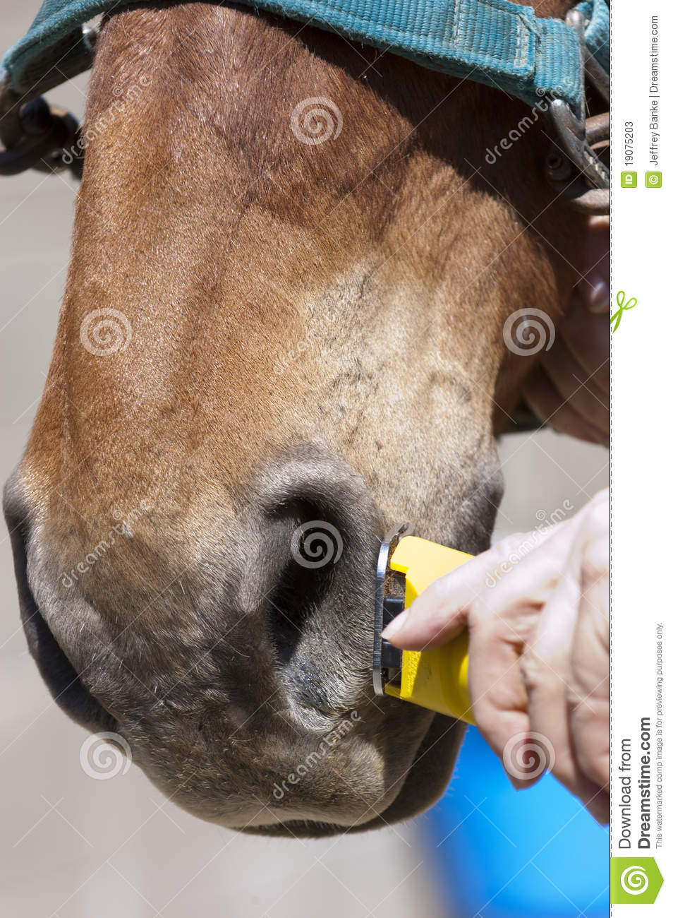 how to trim a horse for a show