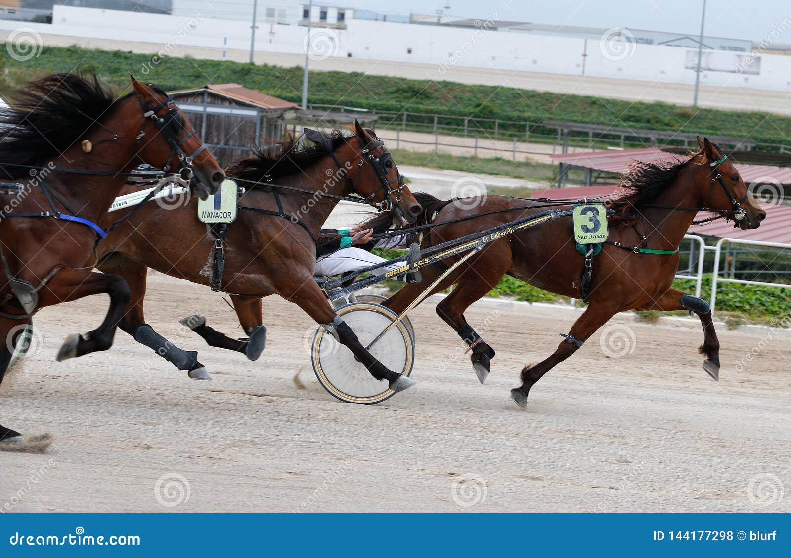 Horse Harness Sulky Race In Palma De Mallorca Hippodrome Panning