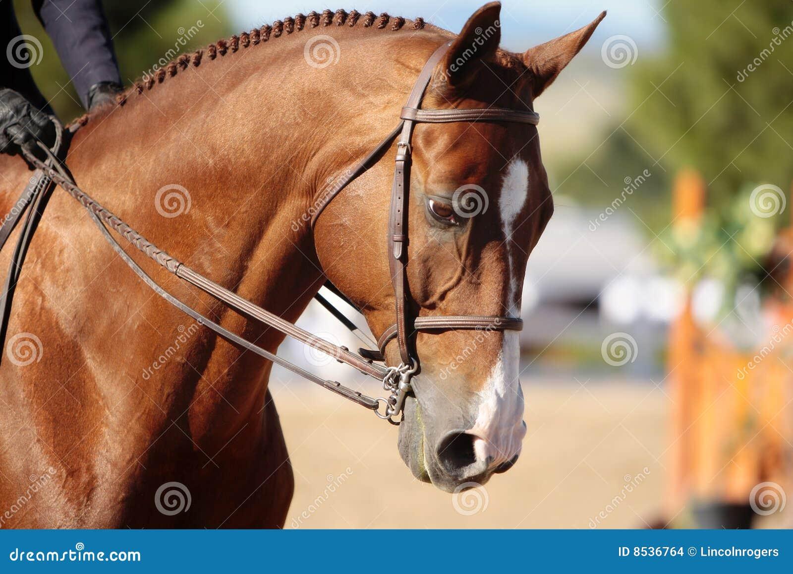 Horse Head in Morning Sunlight