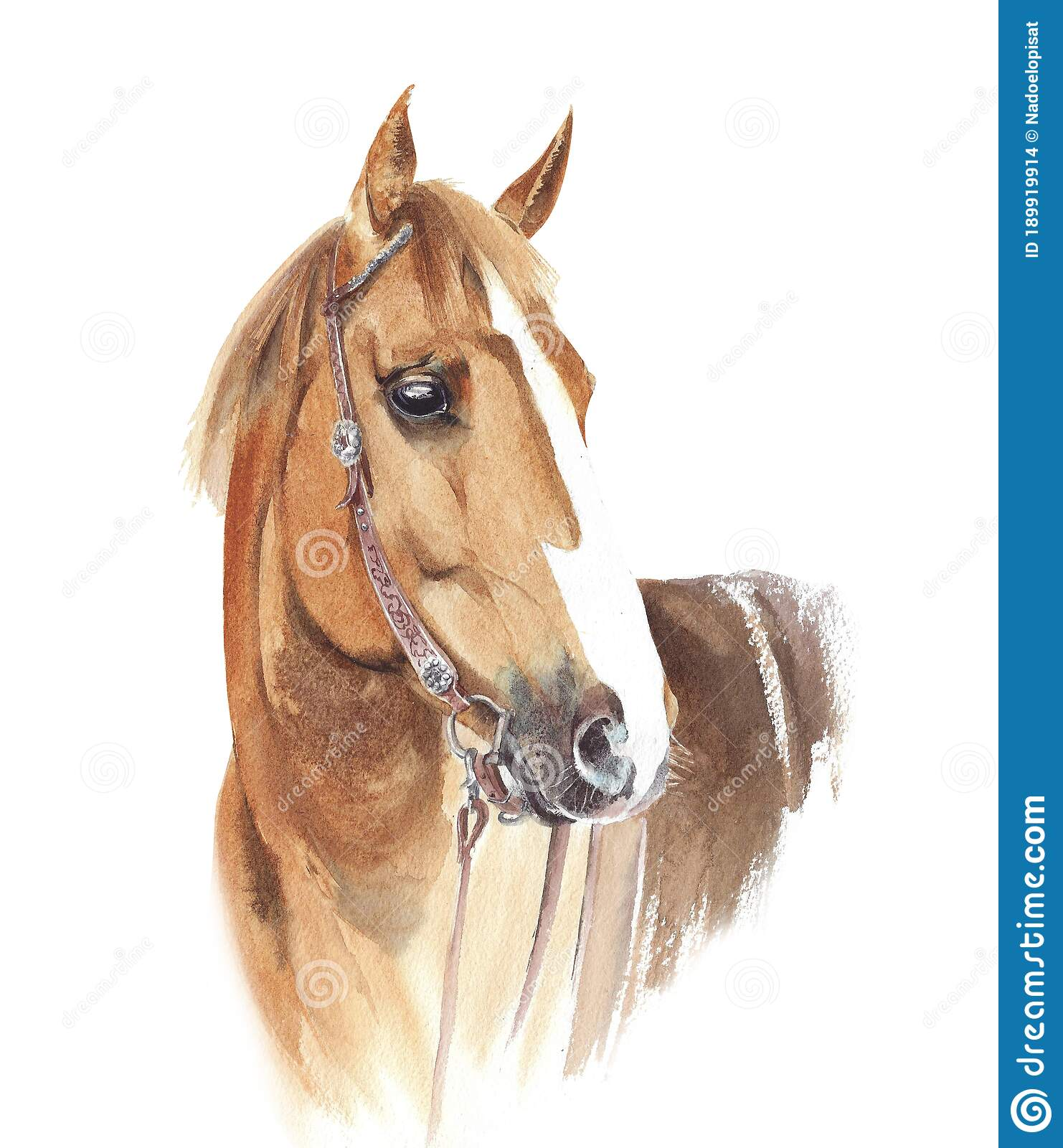 Horse Head Watercolor Painting Photos Free Royalty Free Stock Photos From Dreamstime