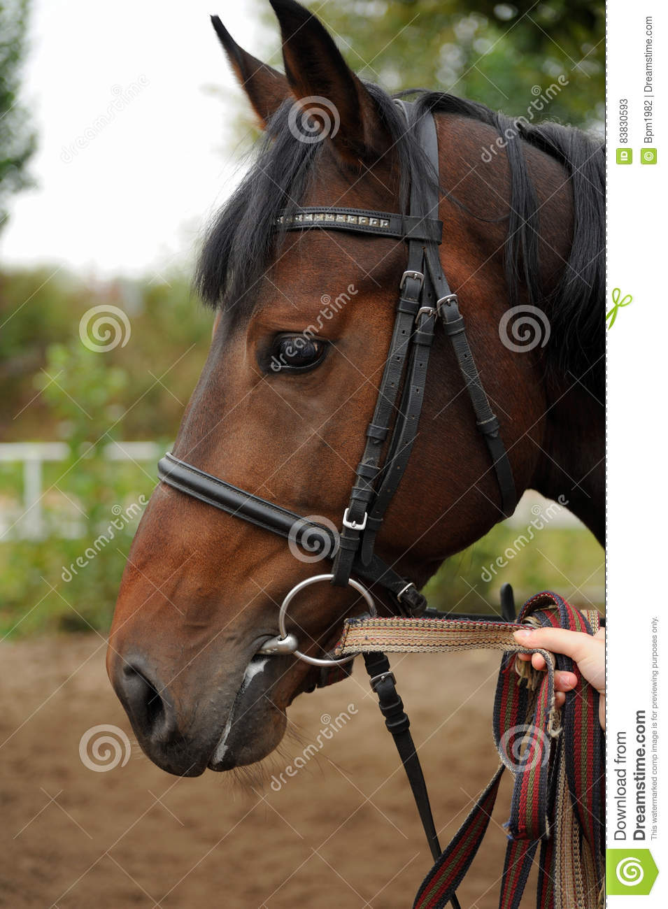 Horse Head Bridle Harness Switch Diagram Singlepin Mcu Gets Three Colors From Twocolor Led Lighting Content Portrait In Stock Image Of Rh Dreamstime Com Friesian Wall Mount