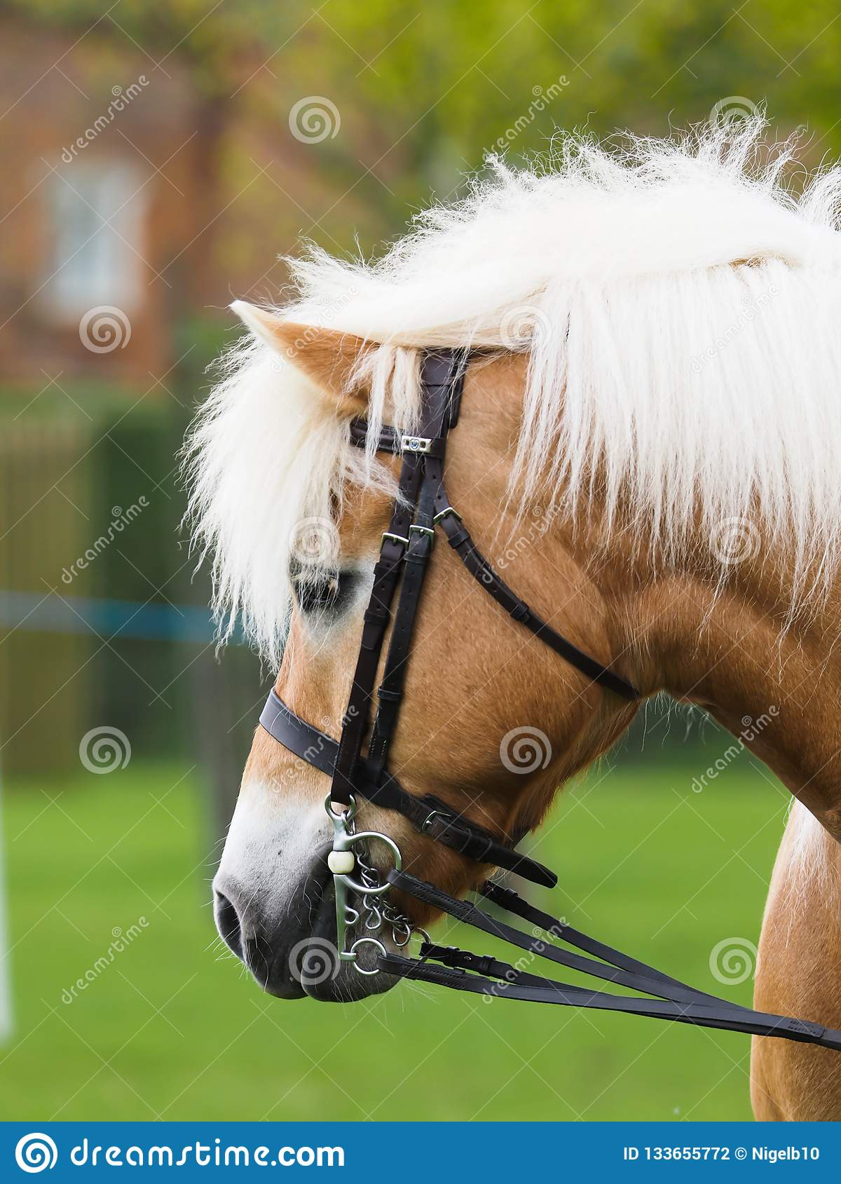 Horse Head Shot stock photo. Image of outdoors, equestrian ...
